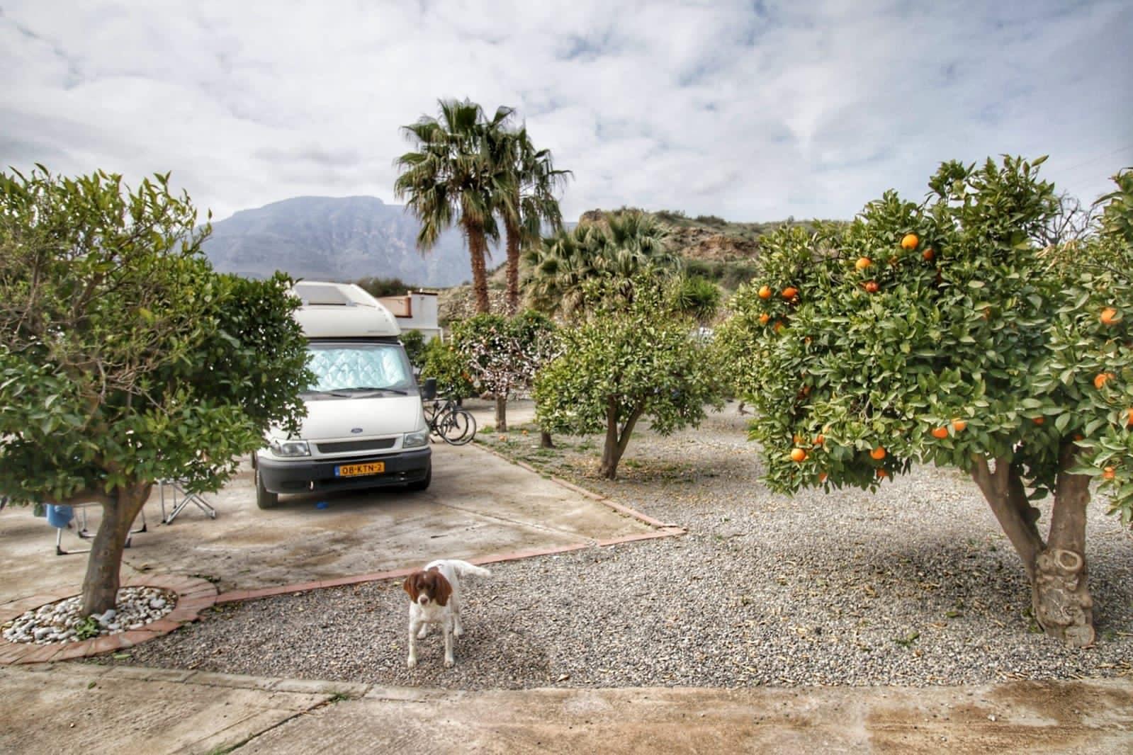 Tijdens de coronacrisis met de camper op een sinaasappelboerderij in Spanje