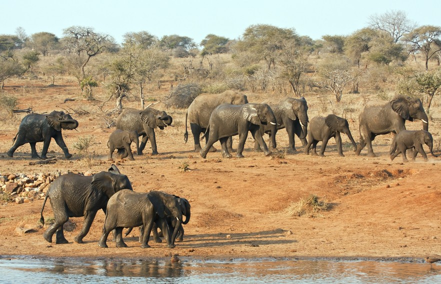 Krugerpark | Must sees in Zuid-Afrika