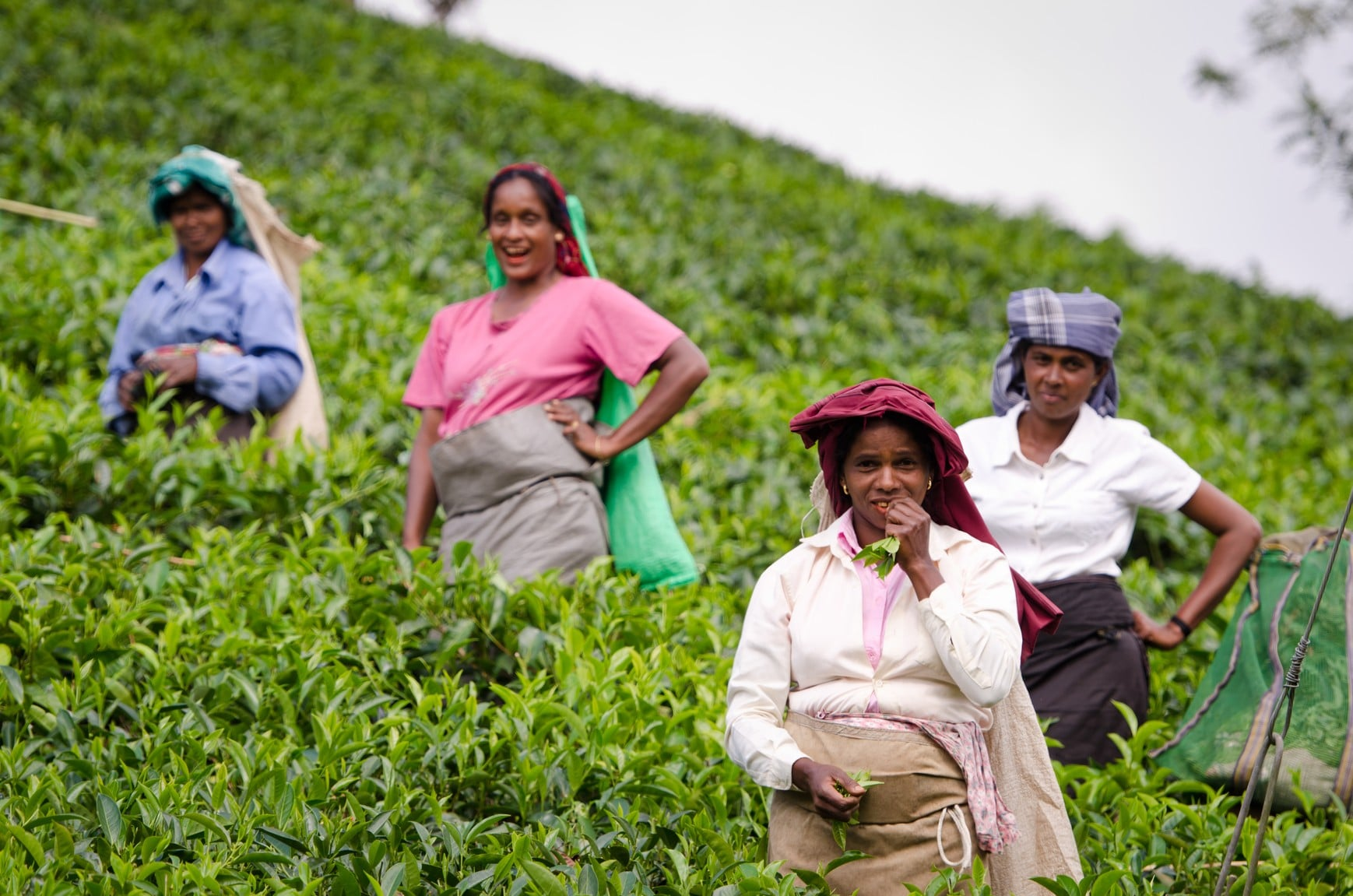 Sri Lanka thee plantage