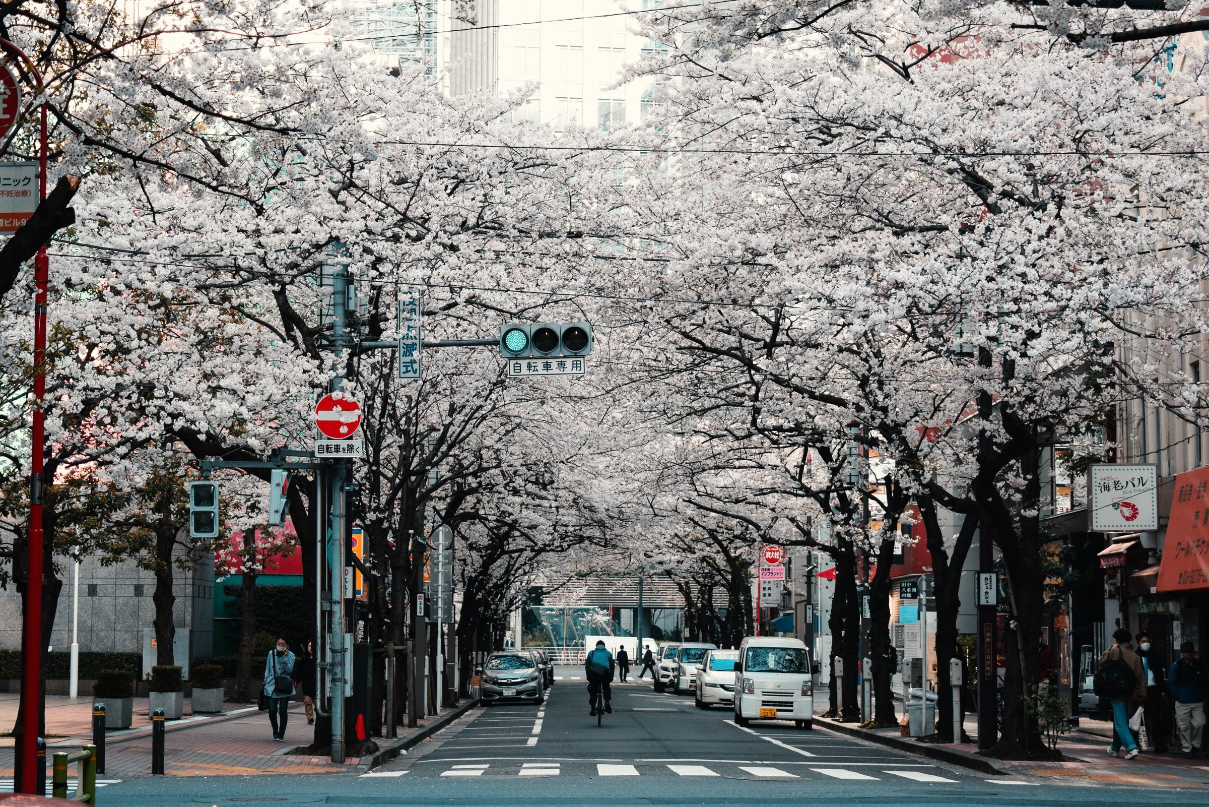 Prachtige bloemen in Tokio, rondreis Japan