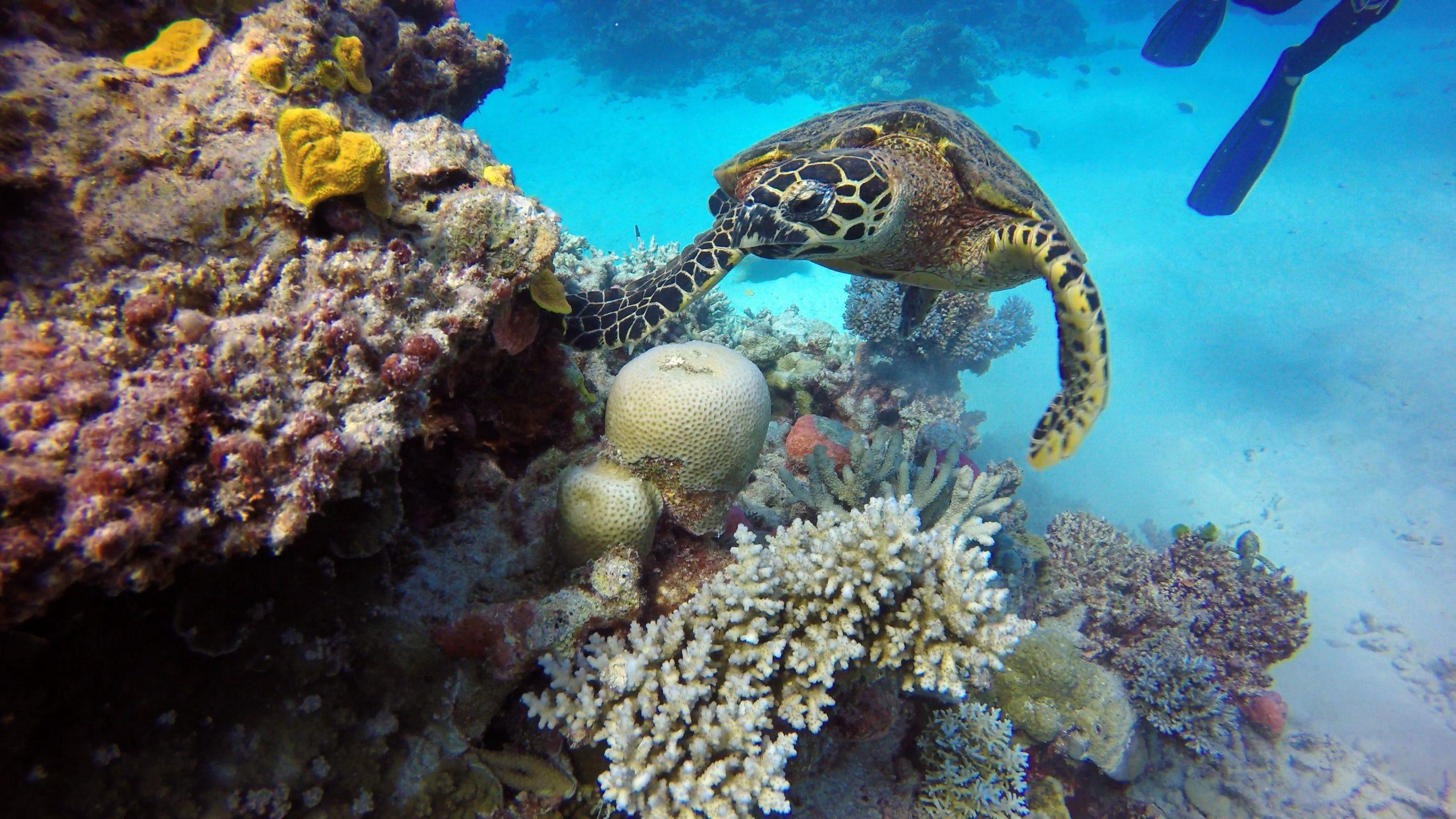 The Great Barrier Reef, Australië