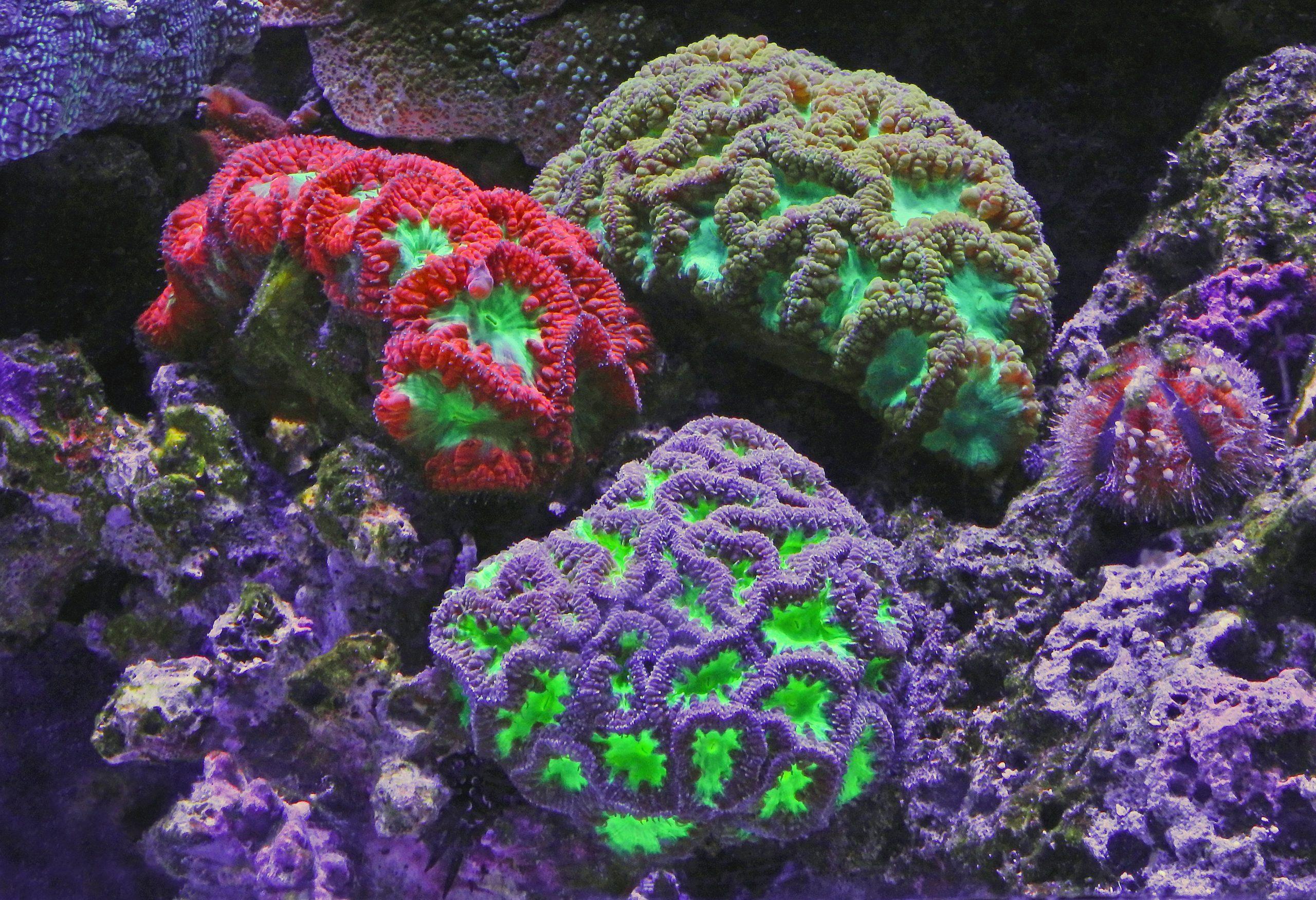 Ningaloo reef is een prachtige duiklocatie