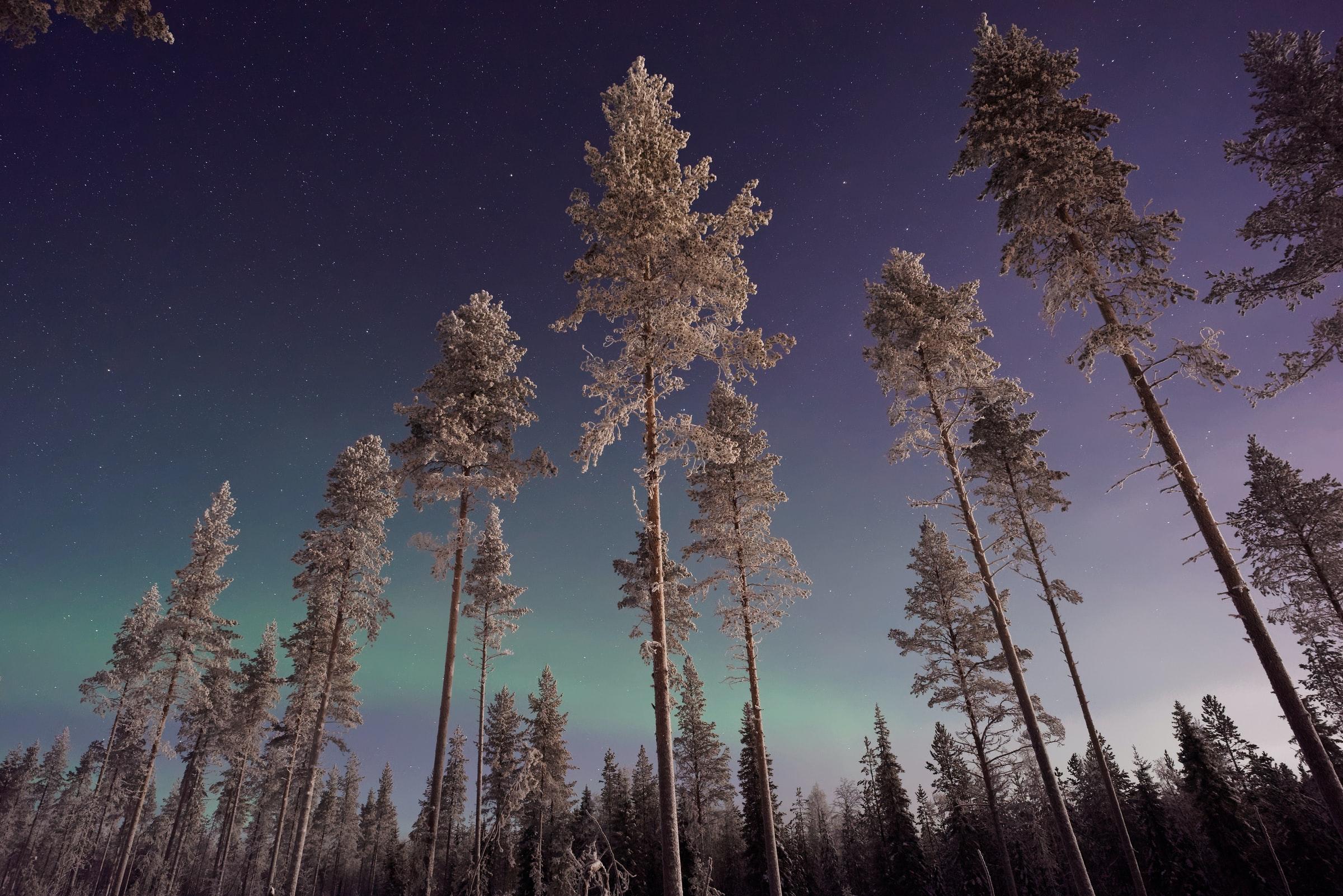Aurora Borealis, Lapland, Finland