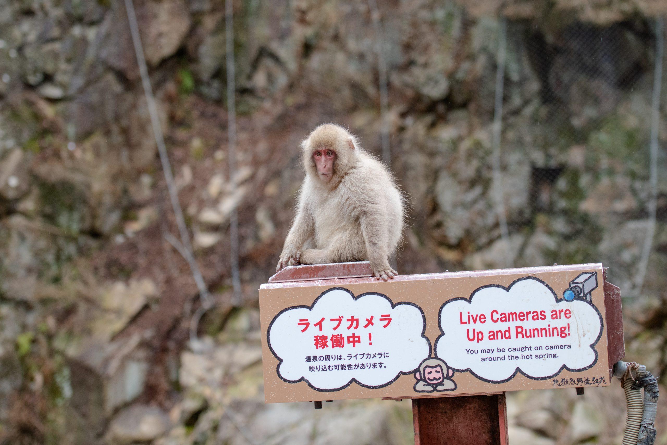 Tijdens je rondreis door Japan zie je veel rare borden en cartoons