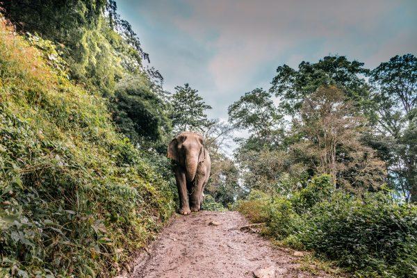 Aziatische olifant, Cambodja must sees