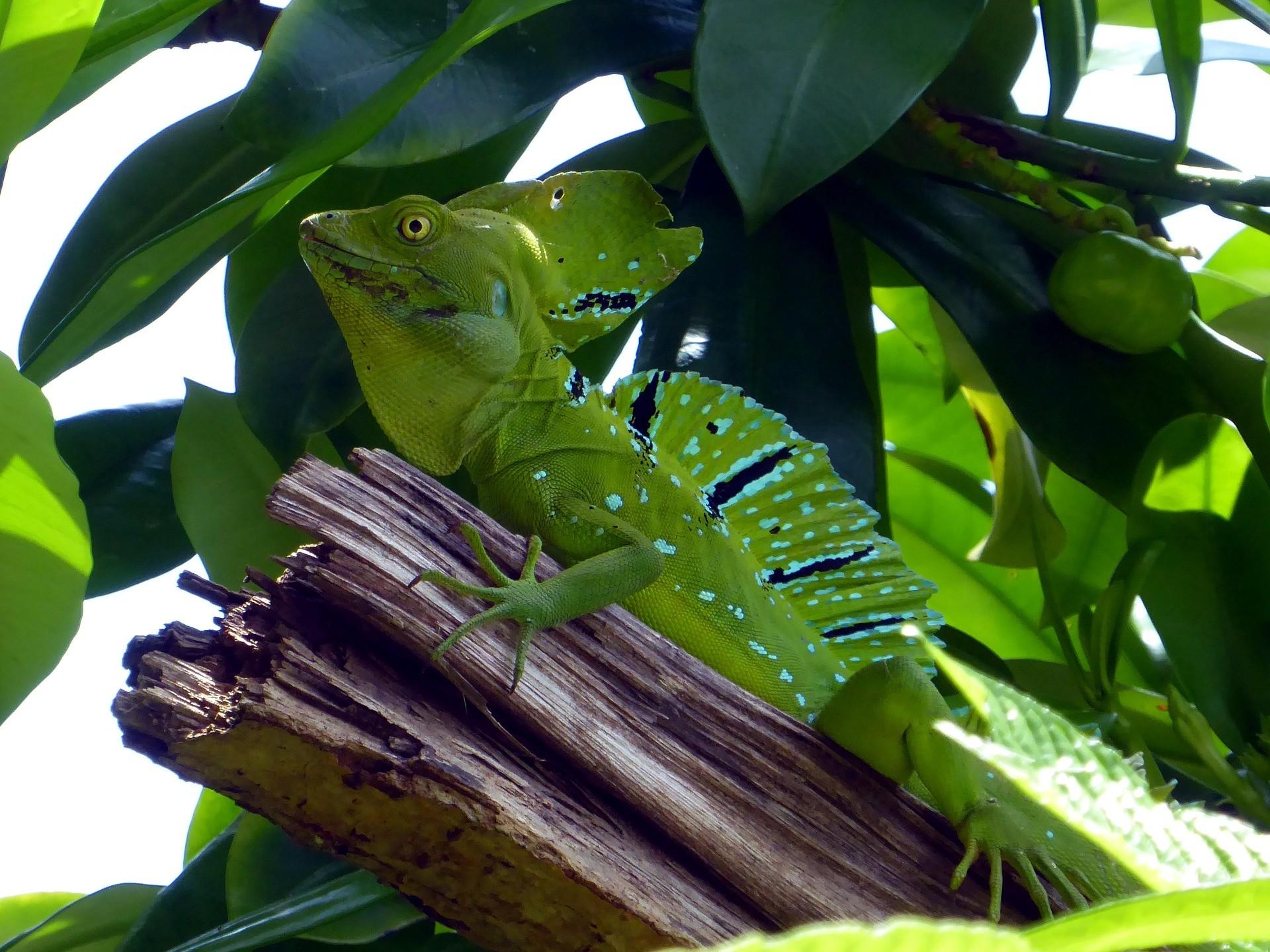 Cahuita , één van de mooiste nationale parken in Costa Rica