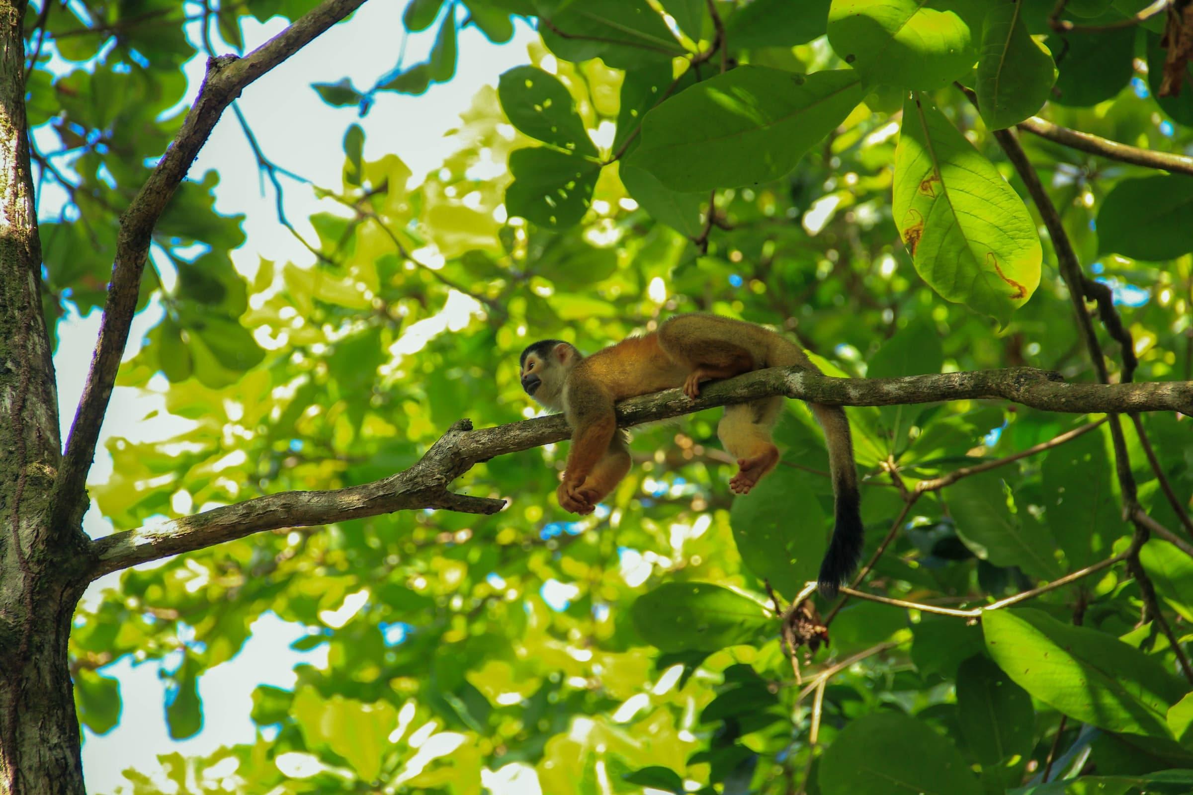 Corcovado Nationaal Park