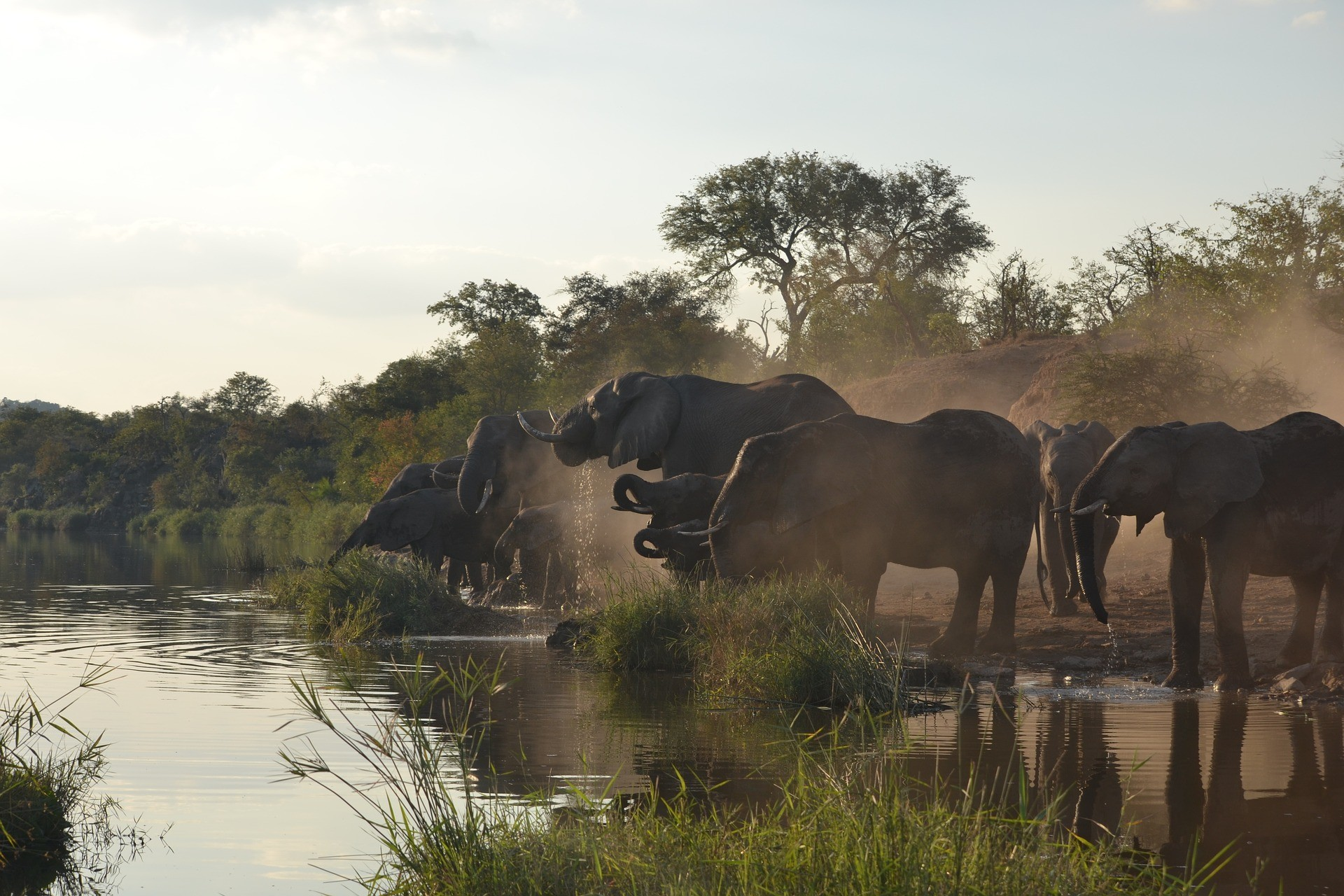 Must see in Afrika: Kruger Nationaal Park - Zuid-Afrika