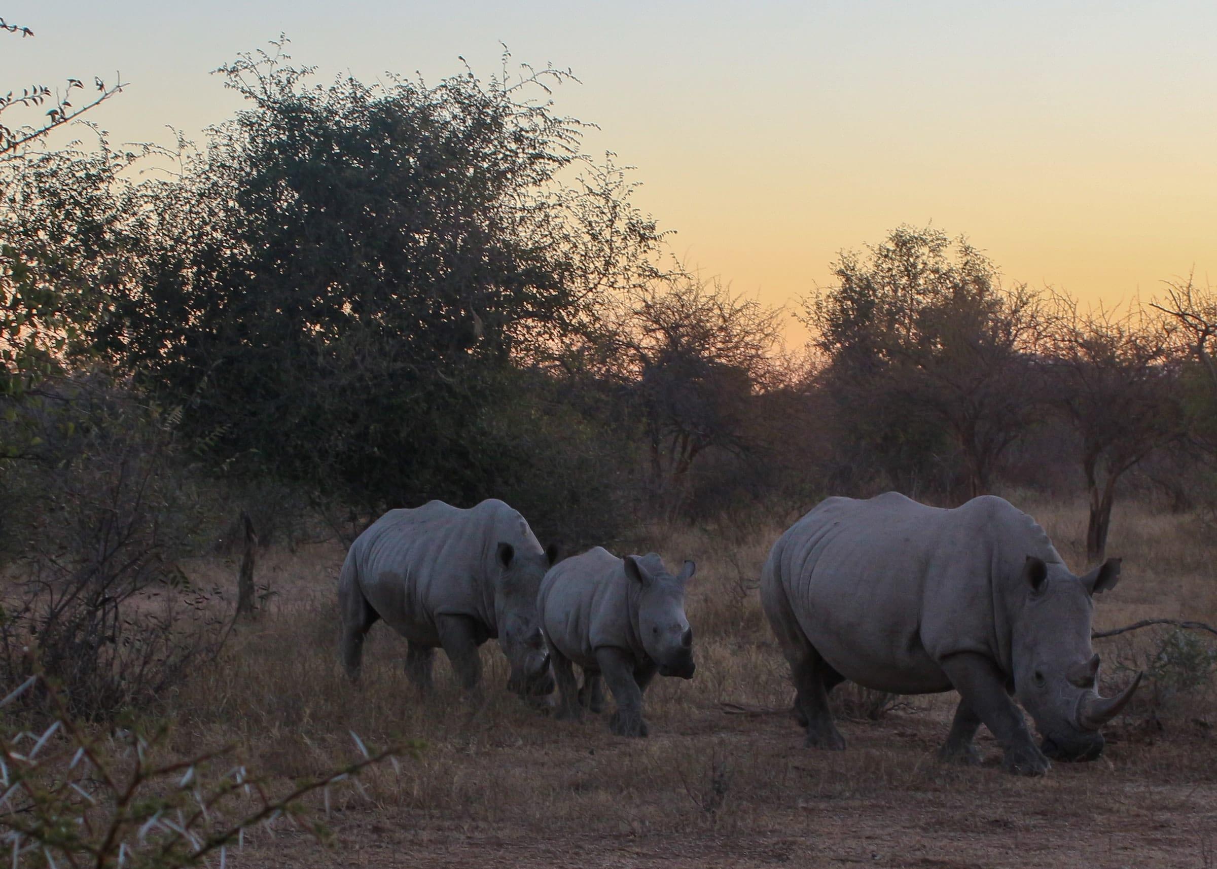 Limpopo, Mozambique