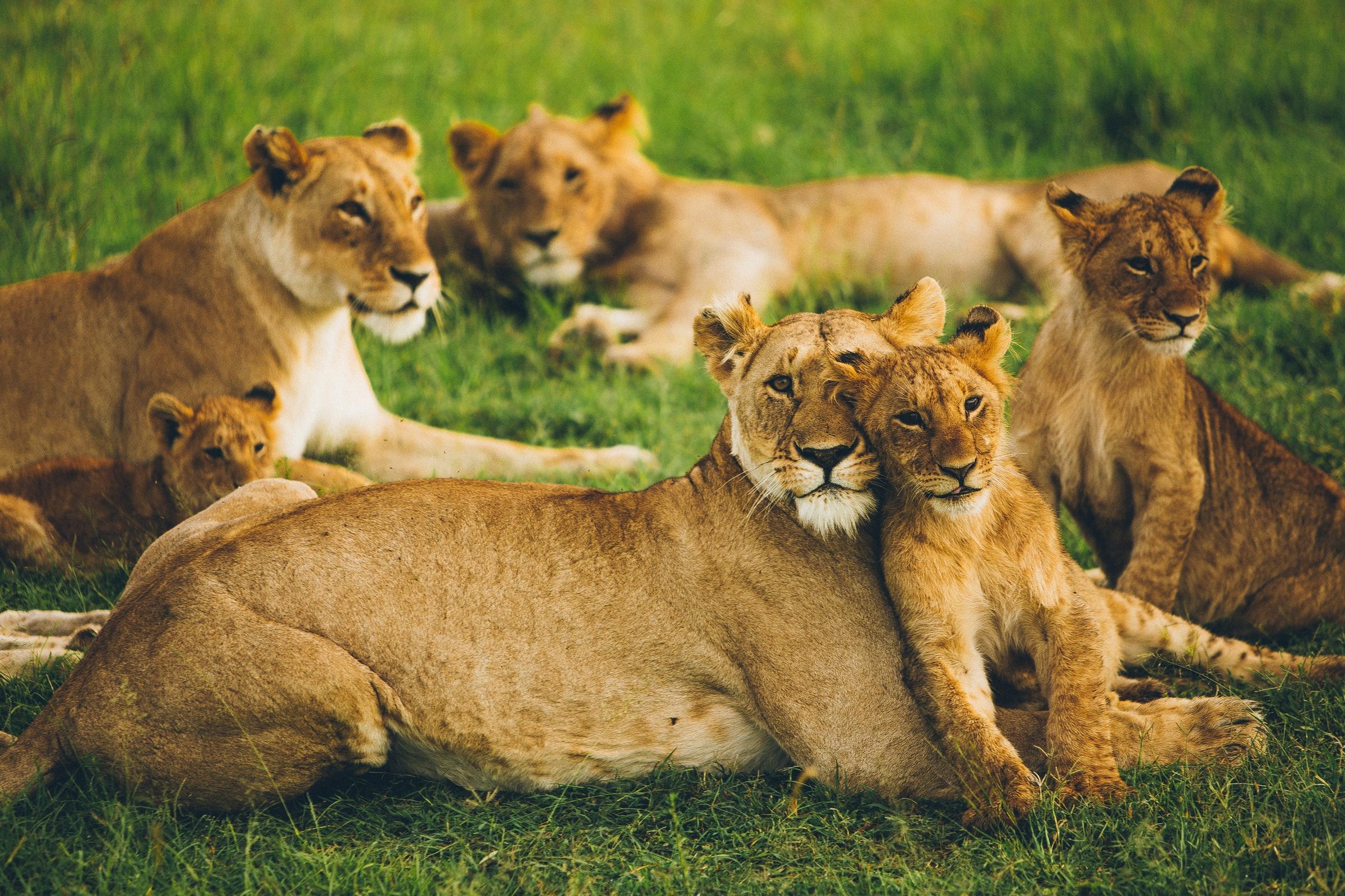 Masai Mara National Reserve - Kenia