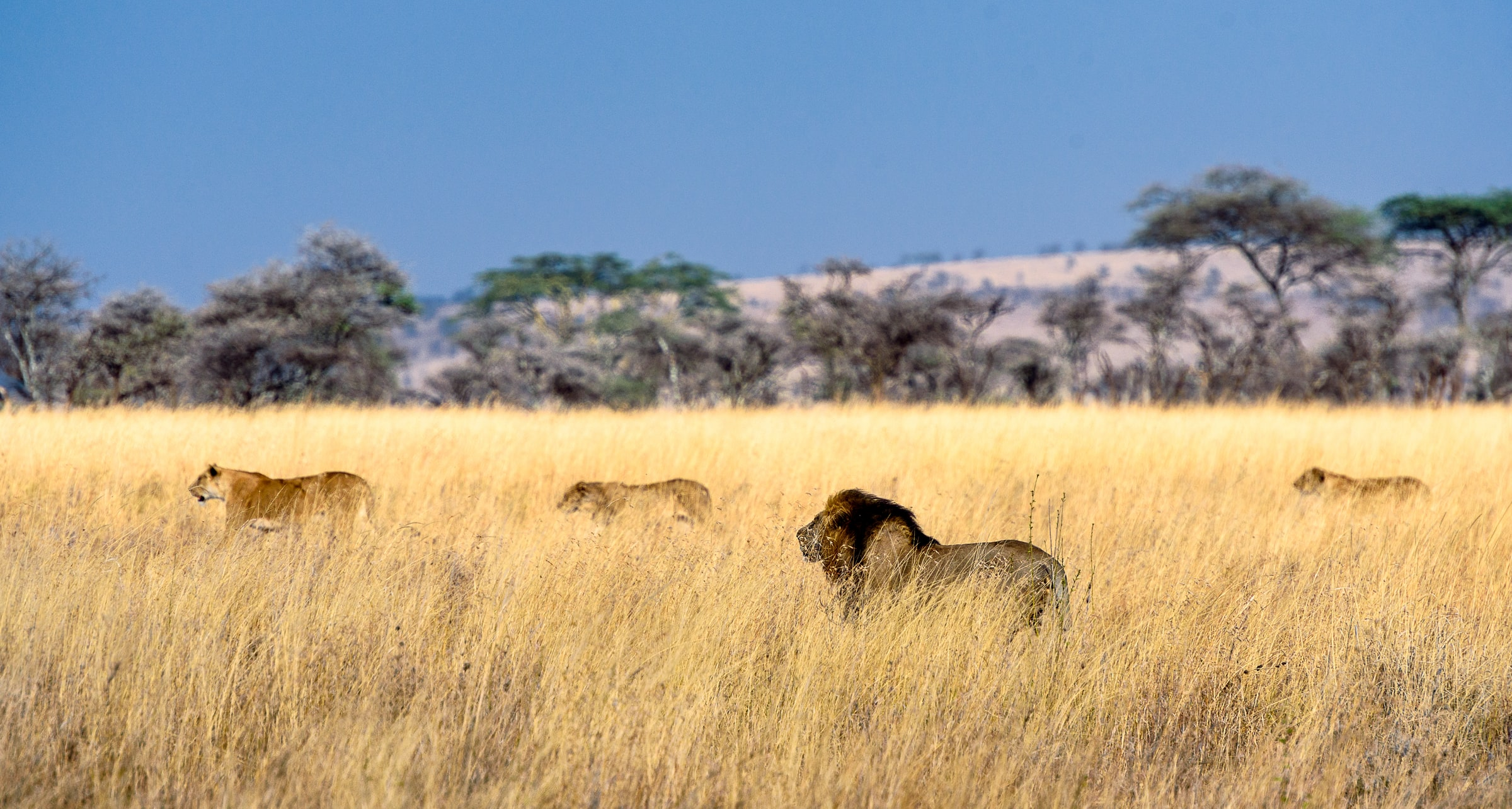Serengeti Nationaal Park - Tanzania