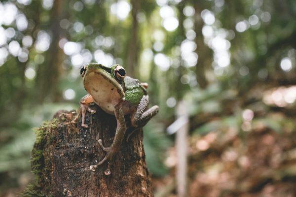 Borneo jungle, 25 grootste eilanden ter wereld
