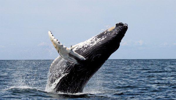Leuke dingen om te doen in IJsland, Walvissen spotten