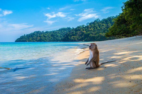 Apen en Rabiës - Vaccinaties wereldreis