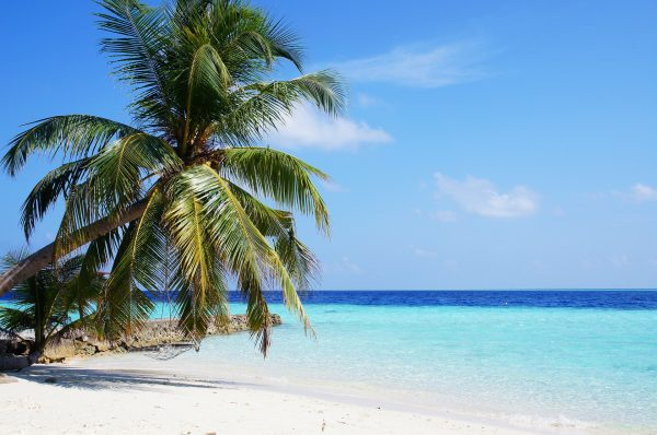 Wit zand, palmbomen en zon | Rosario