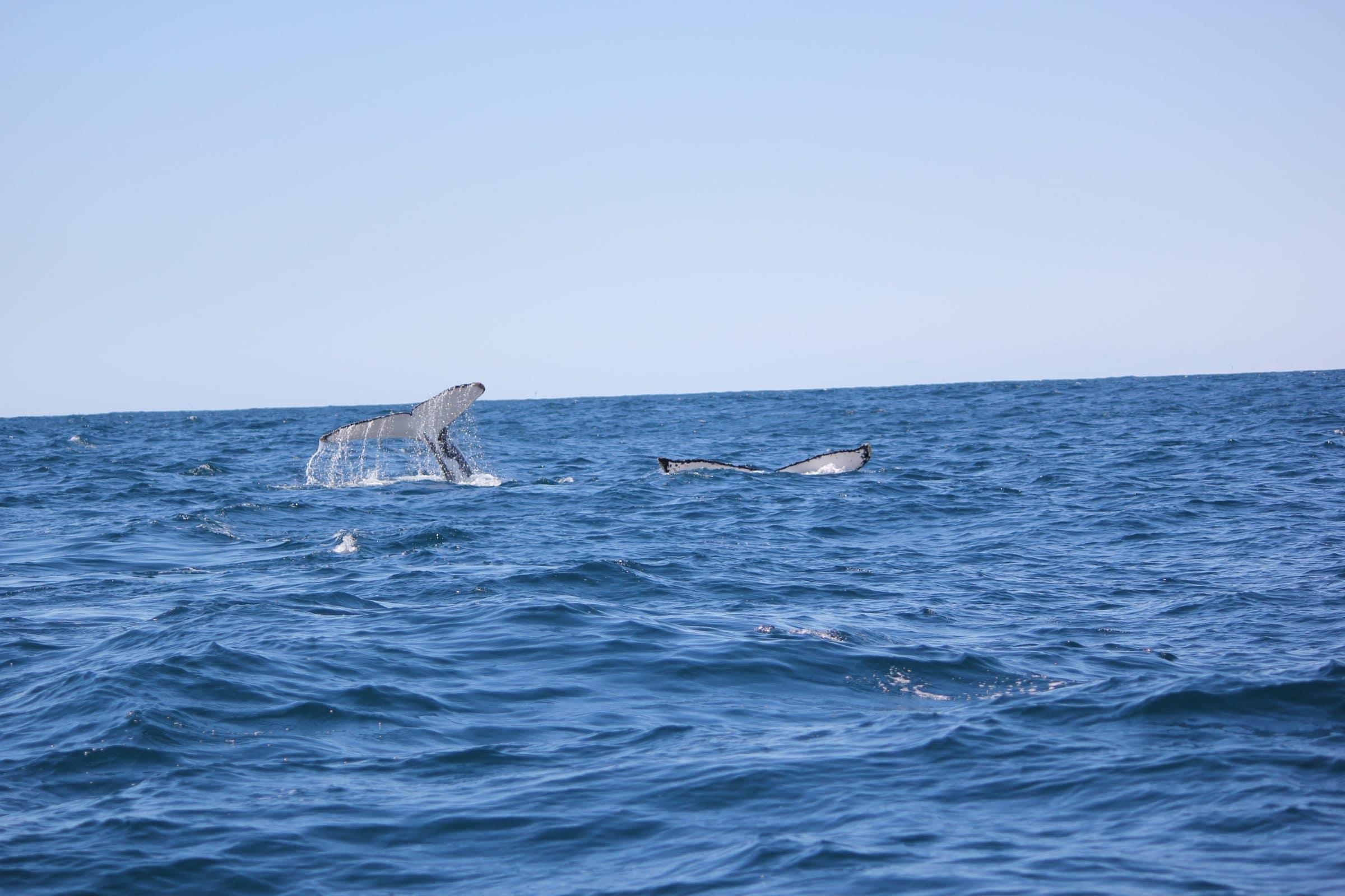 Walvissen spotten in Tenerife