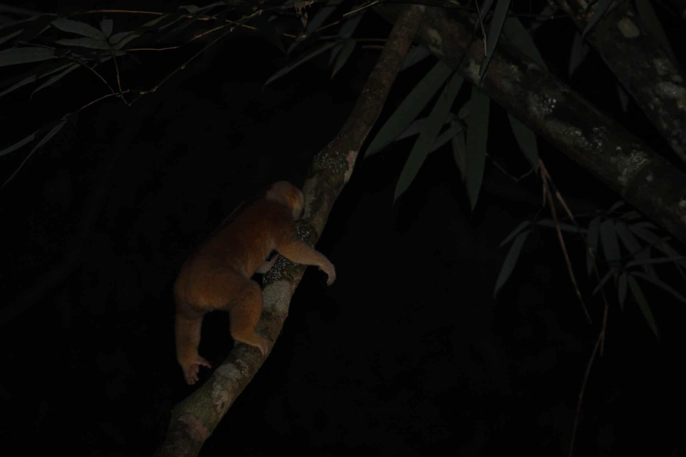 Avond safari in de jungle