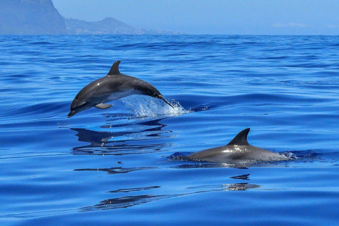 Dolfijnen in Tahiti