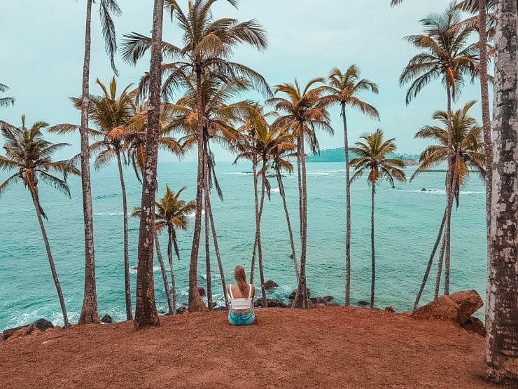 palmbomen spot mirissa