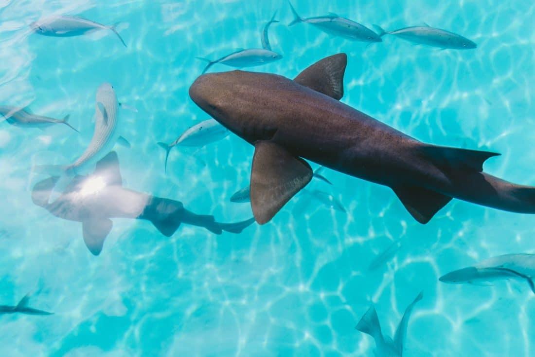 Snorkelen en duiken in Tahiti