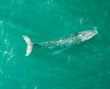 Walvissen - walvissenseizoen in Australië