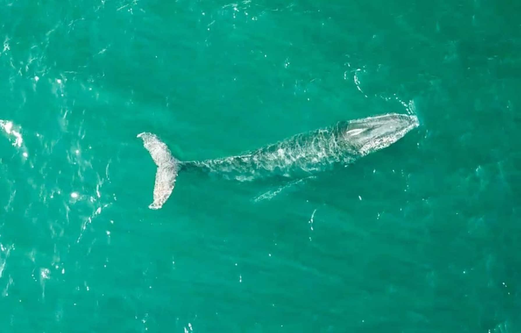 Het walvissen seizoen in Australië komt ten einde