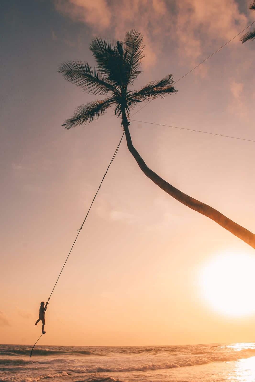 Palmtree Swing - Reisroute Sri Lanka