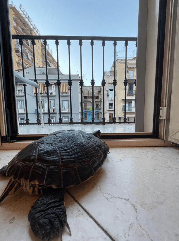 Hostel Mancini | Verblijf in Napels