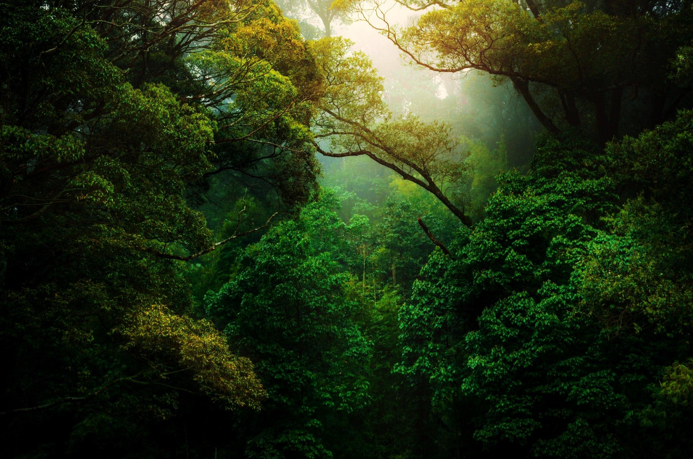 De Amazone | De 7 natuur wereldwonderen