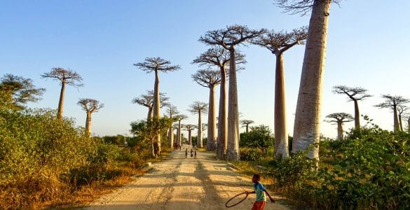 Baobab-laan-Morondava