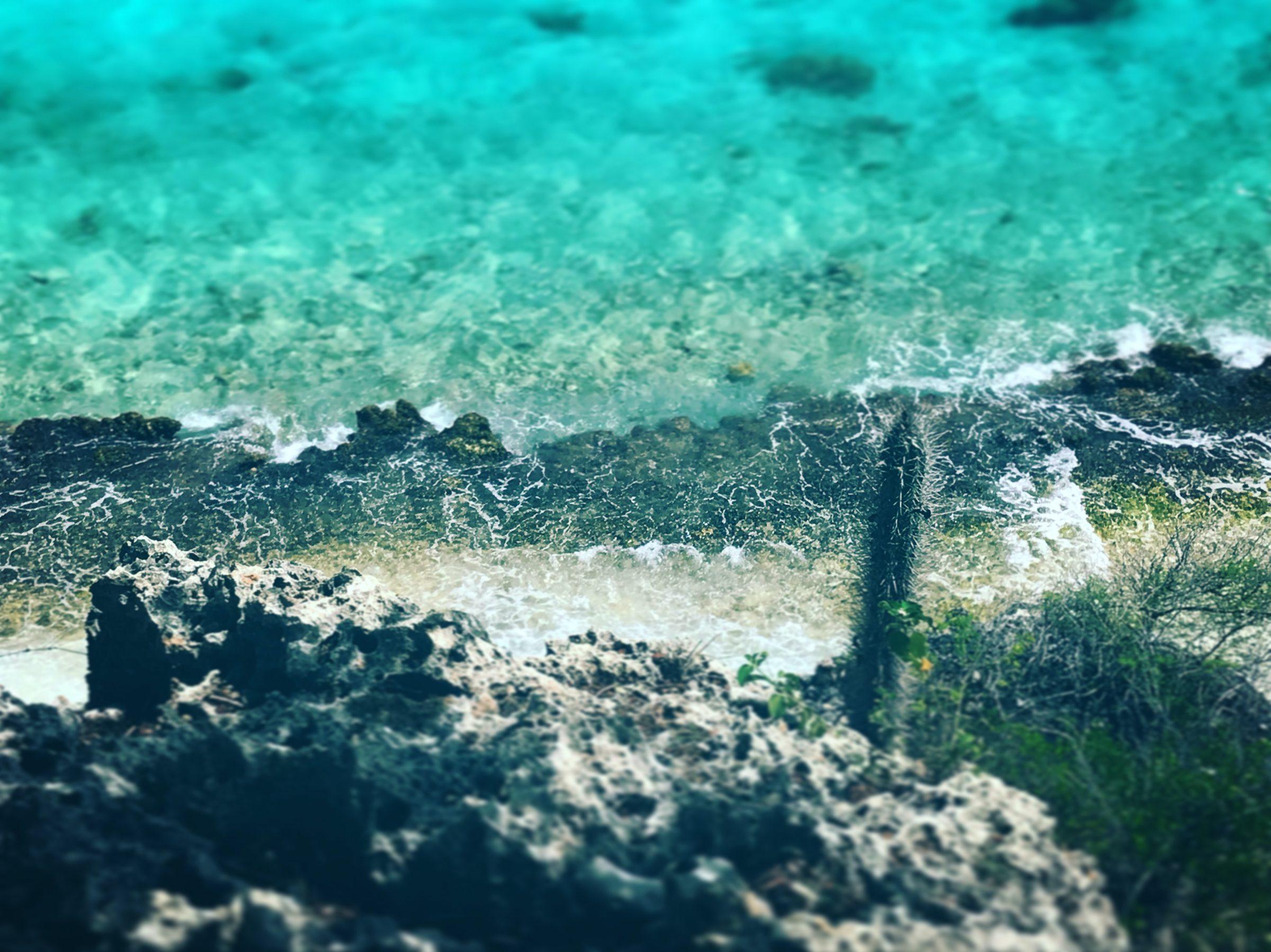 Wat te doen op Bonaire