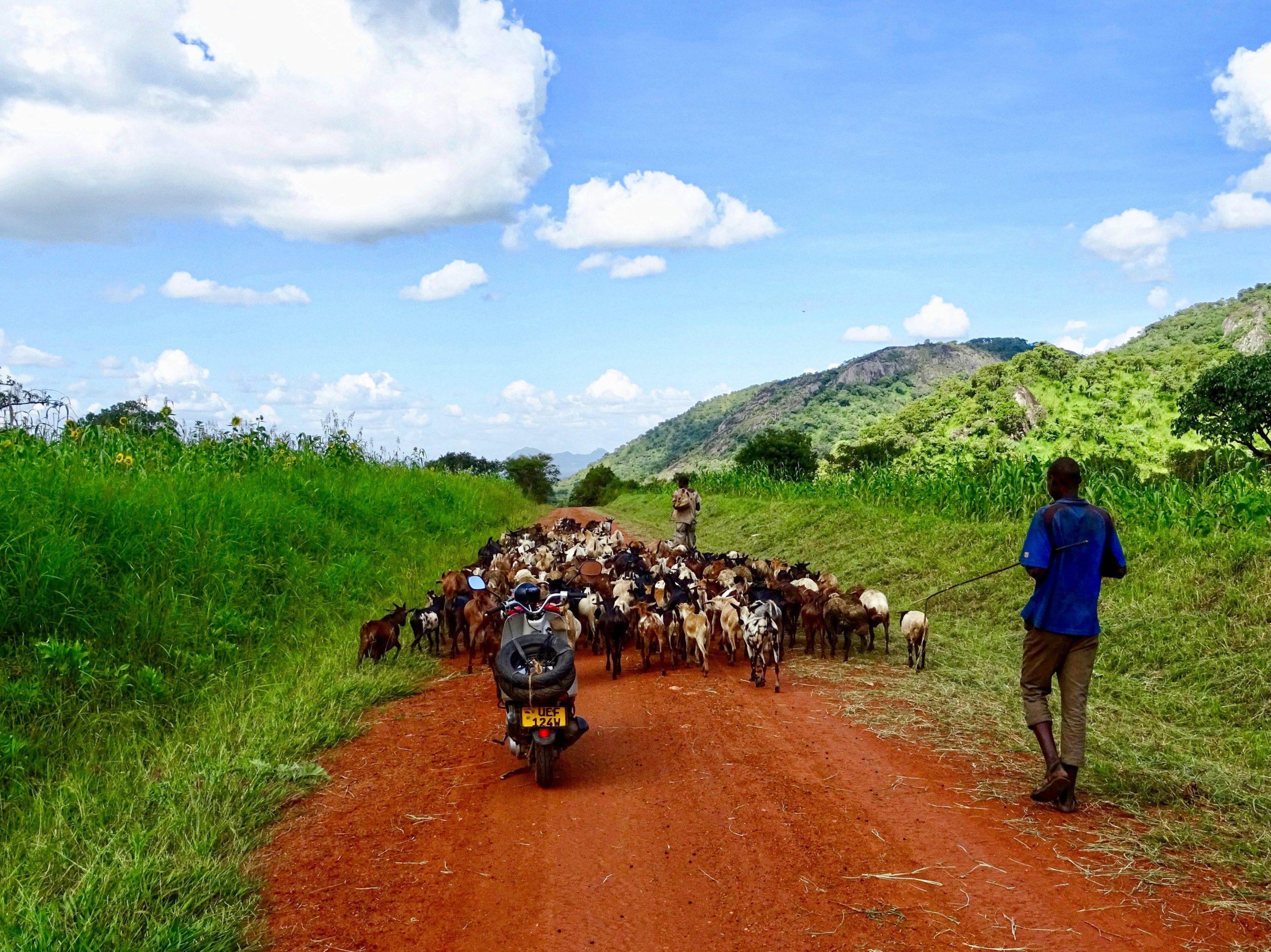 Filevorming op weg naar Kidepo