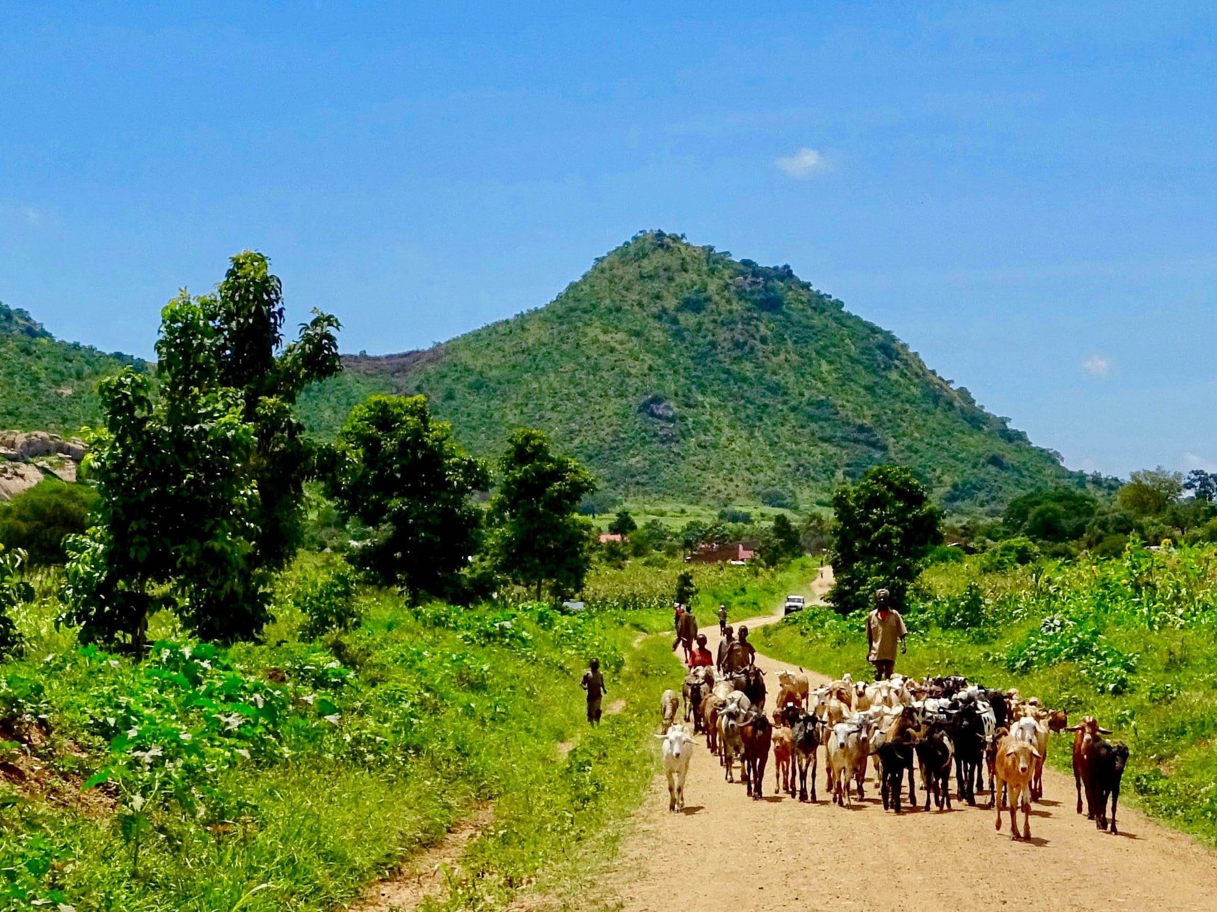 Geiten op weg naar Kadepo