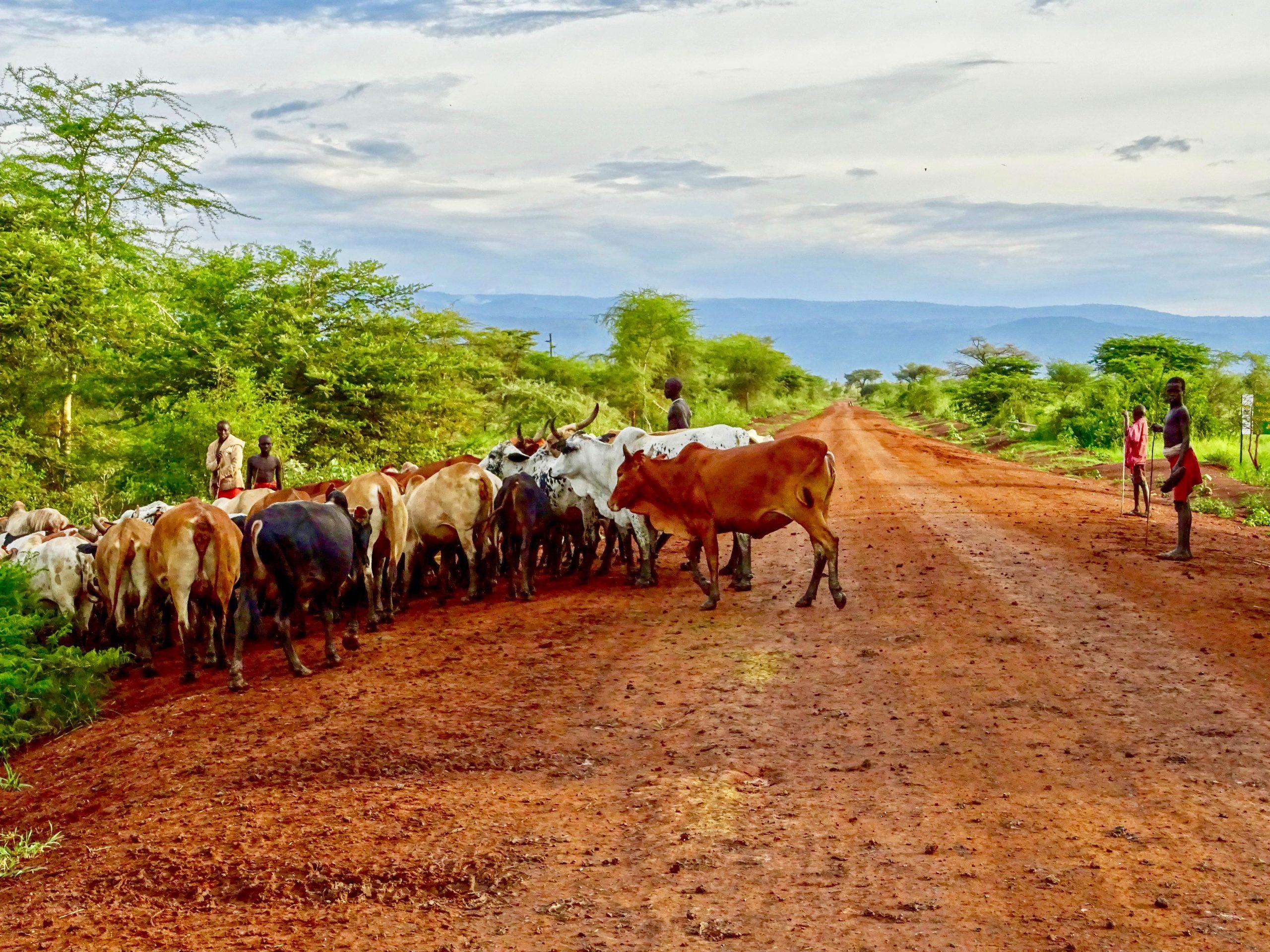 Herders in Pian Upe Wildlife Reserve