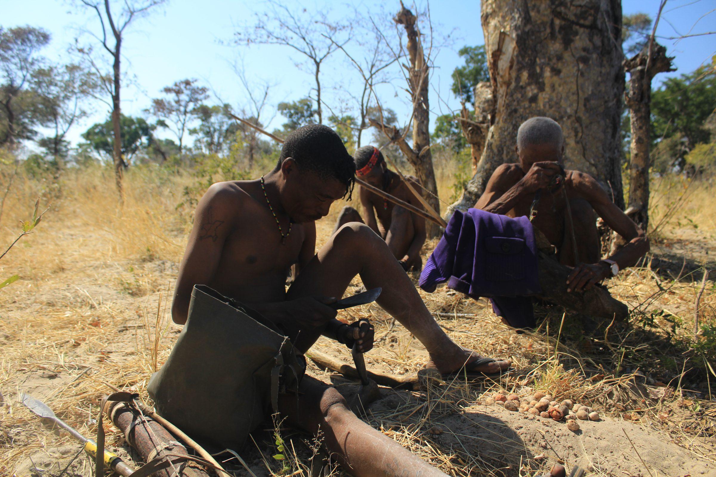 Bosjesmannen verzamelen de Mangetti noten en maken ze open om ze op te eten