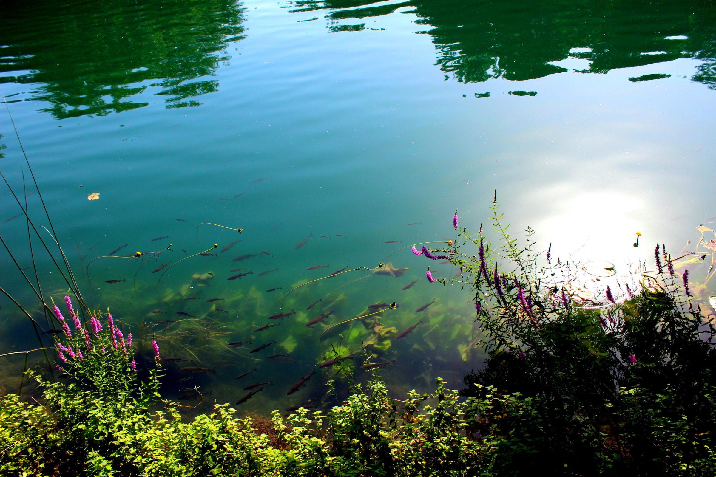 Kraakhelder water in Krka - Wandelen