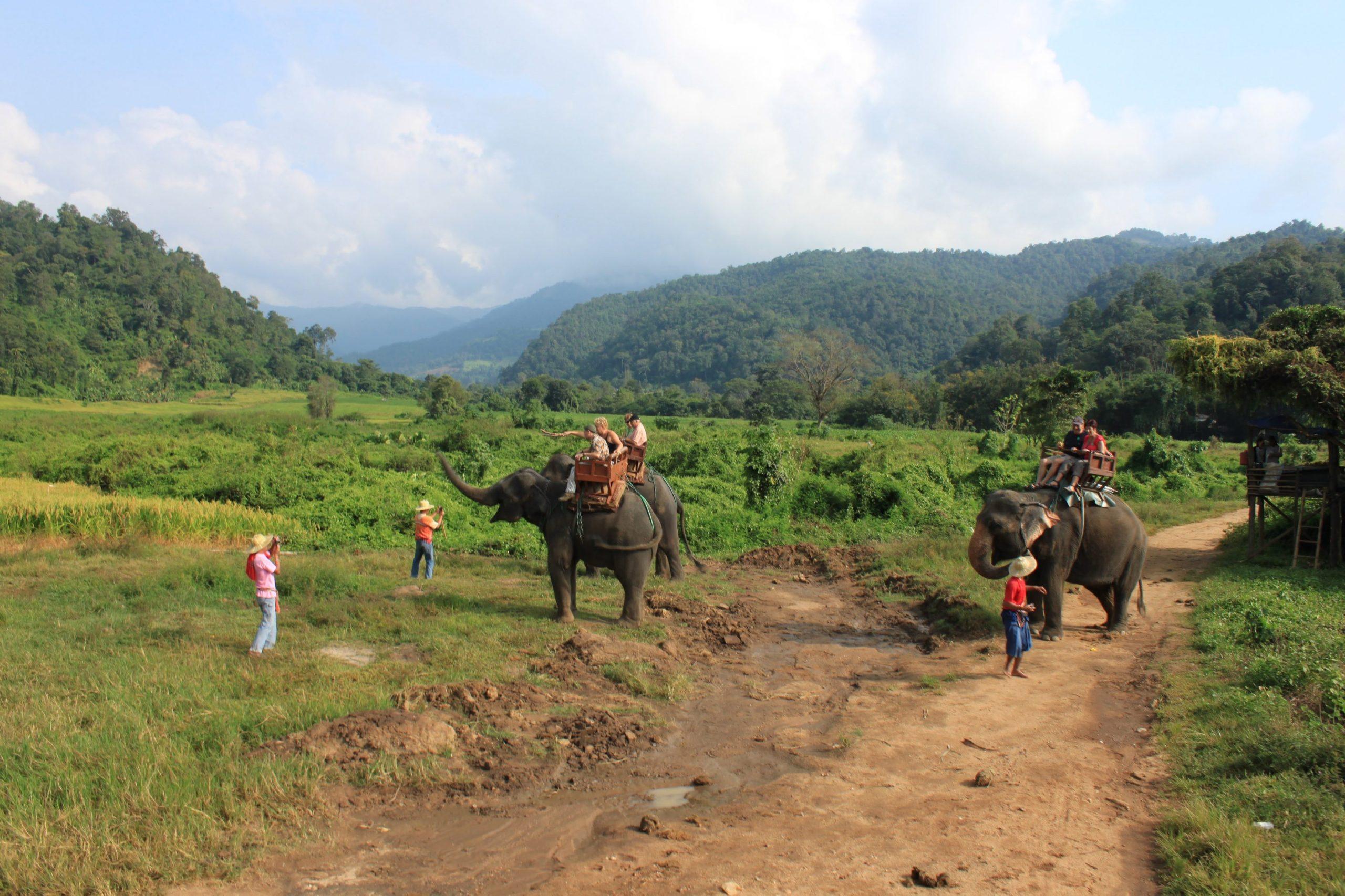 olifantenritjes - doe het niet