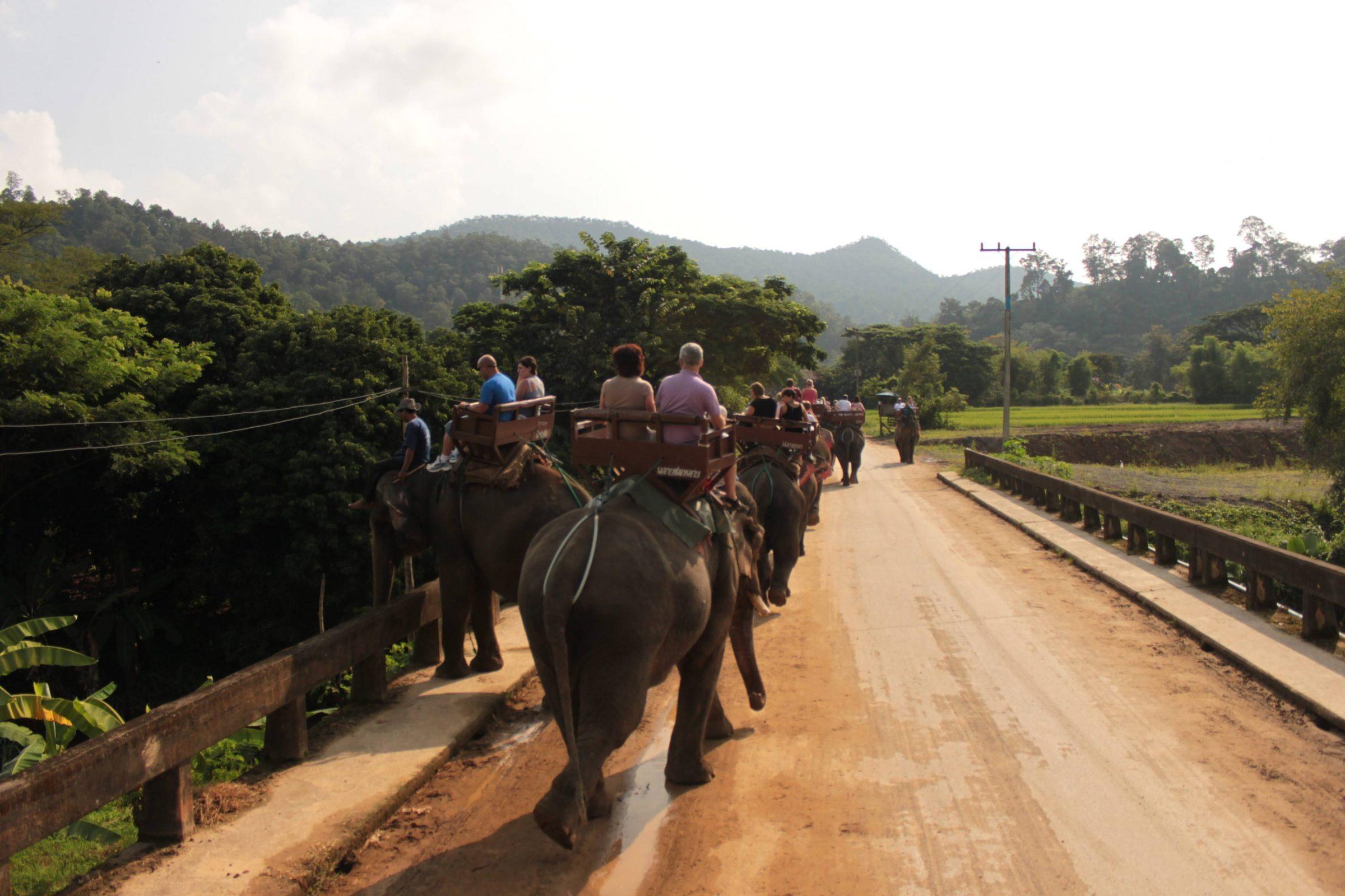Olifantenrit in Chiang Mai, Thailand