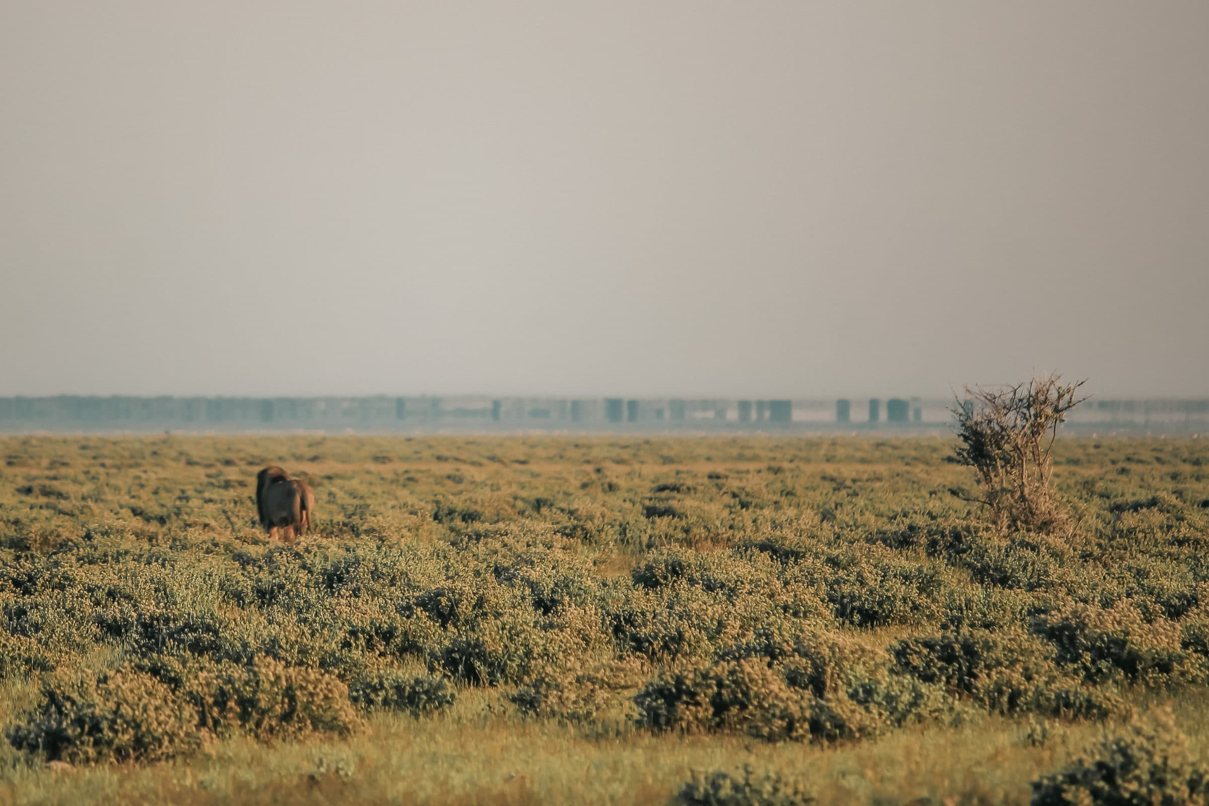 Na het regenseizoen in april, is het in Etosha National Park prachtig groen