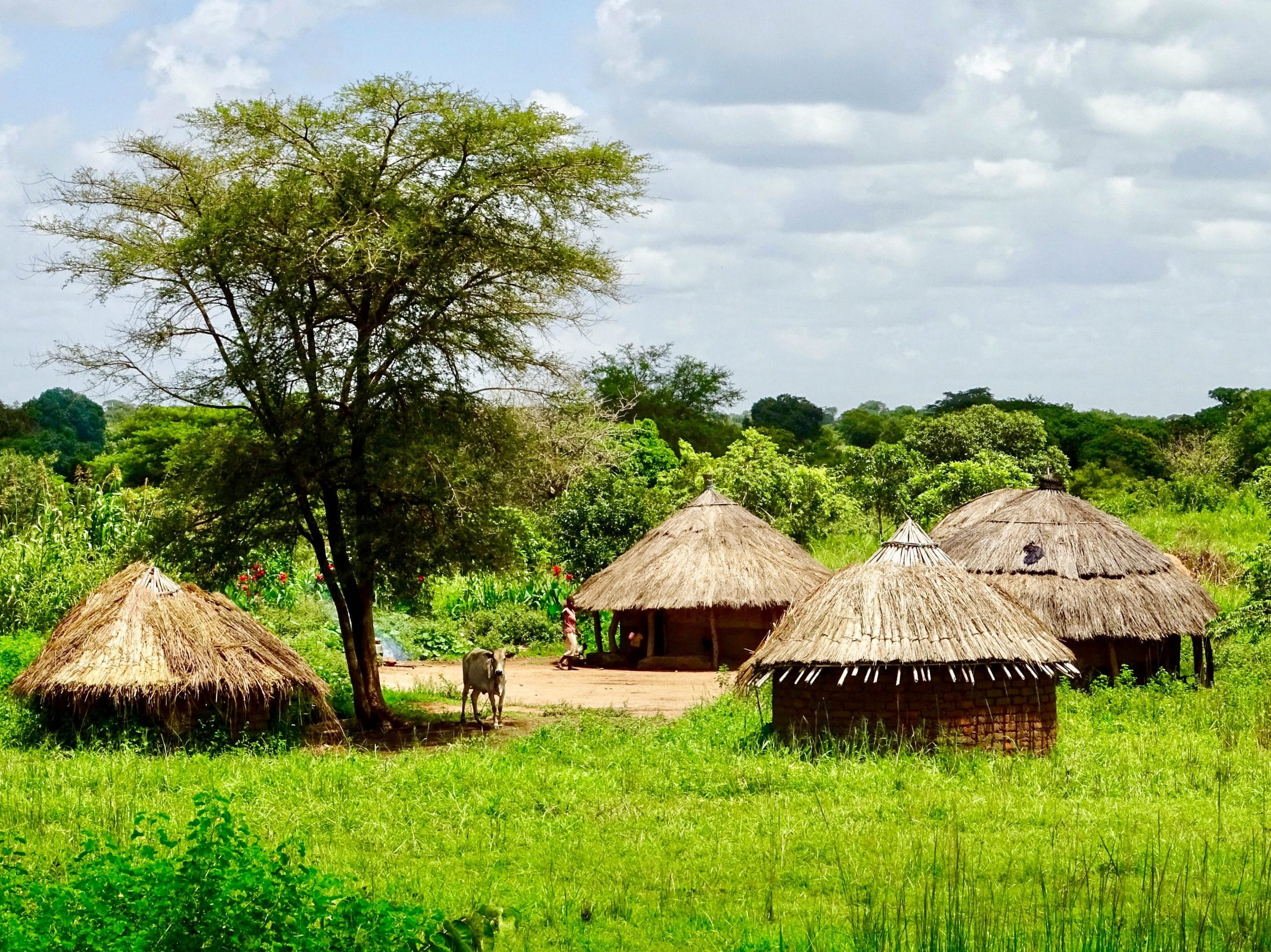 Karakteristieke Acholi nederzetting op de weg naar Gulu