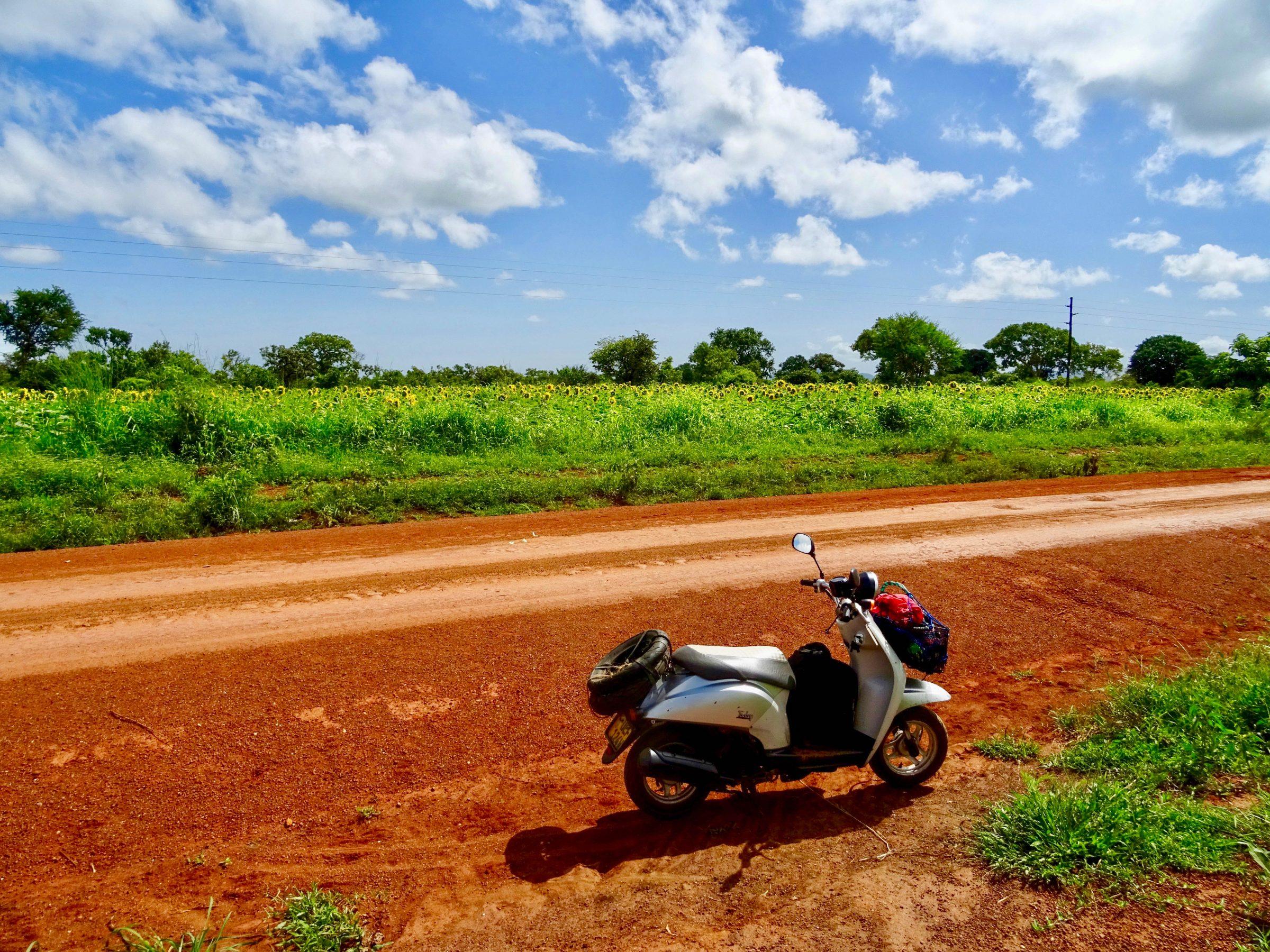 Kilometerslange velden vol zonnebloemen nabij Namokoro