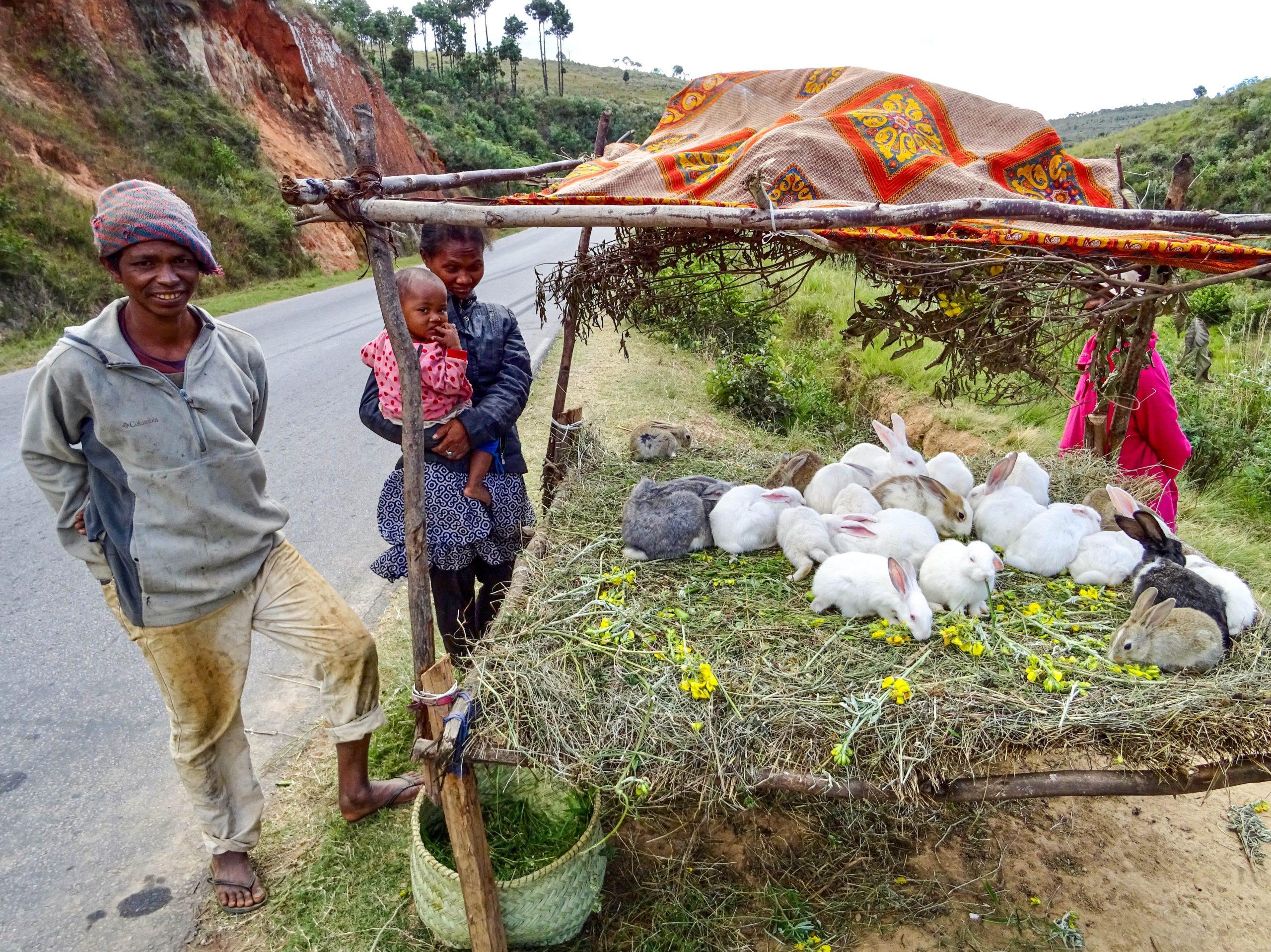 Konijnen in de verkoop op de RN7 richting Antsirabe