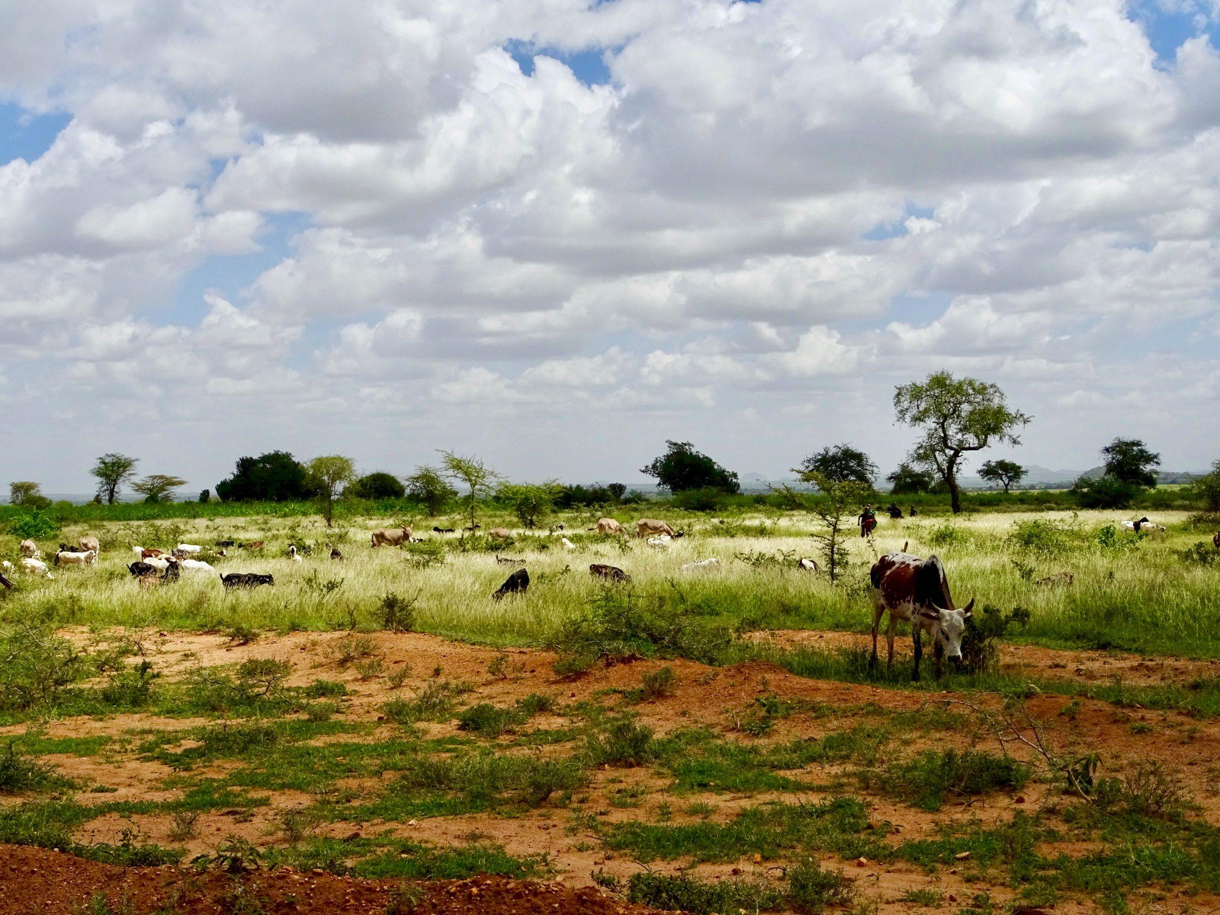 Landschap in Matheniko Game Reserve