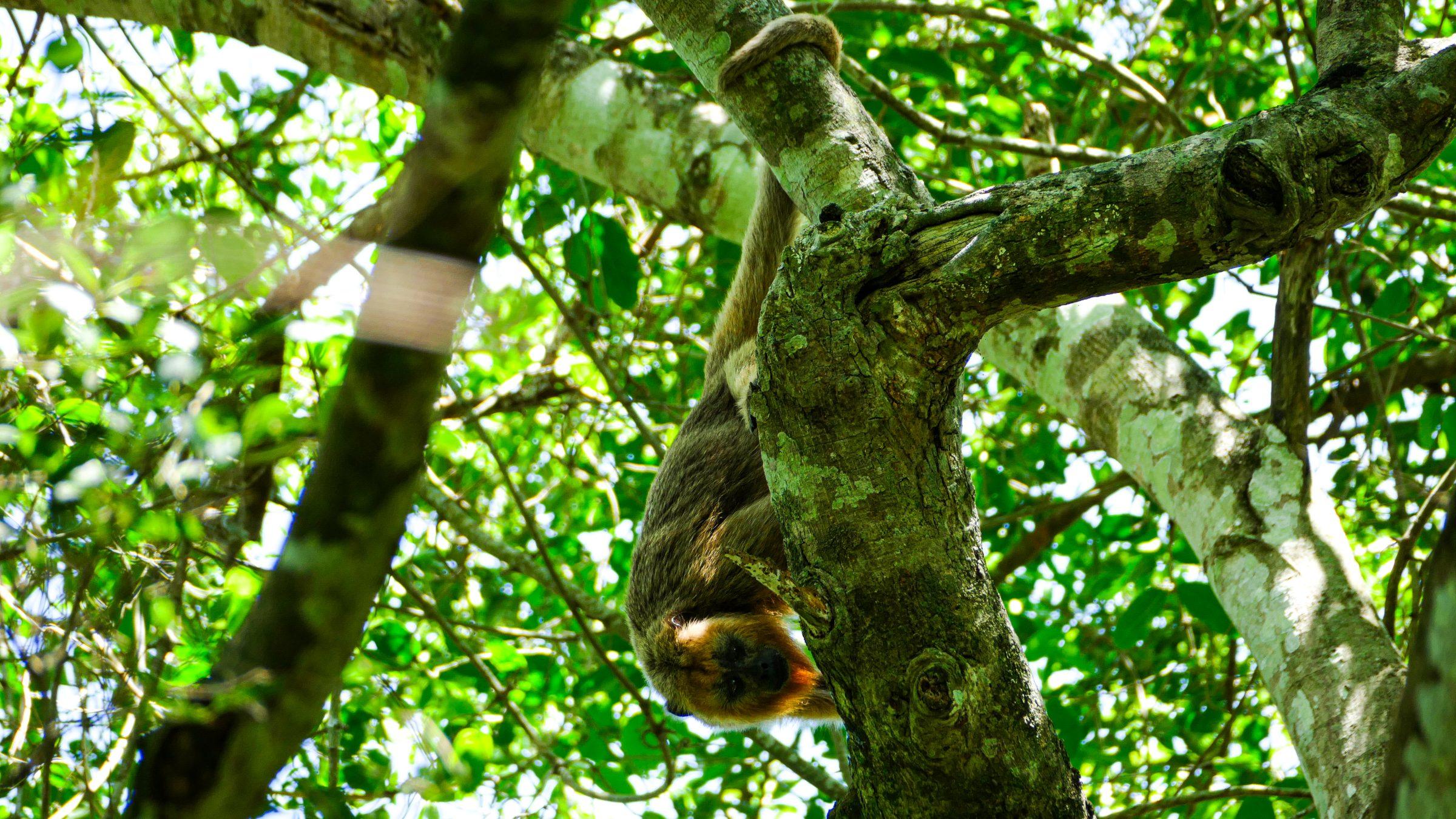 Dieren spotten – Pantanal