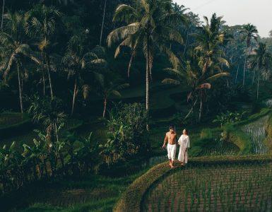 Tegalalang rijstvelden bali