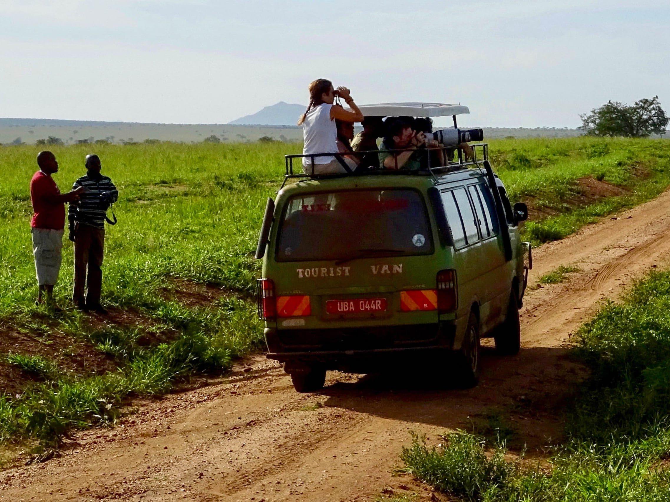 Toeristen zien een leeuw op een rots in Kidepo