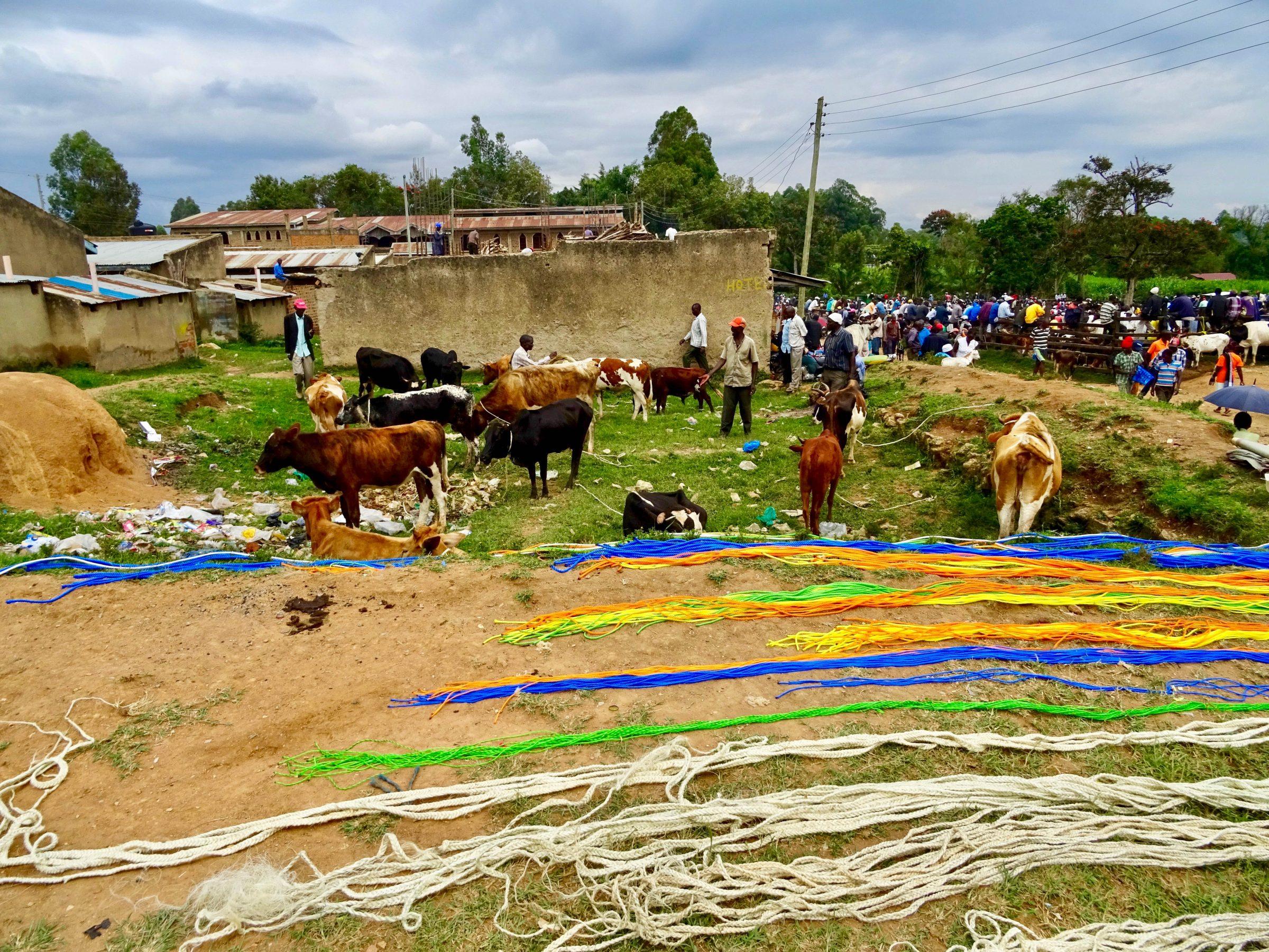 Gekleurd kabeltouw en de veehandel in Lubao