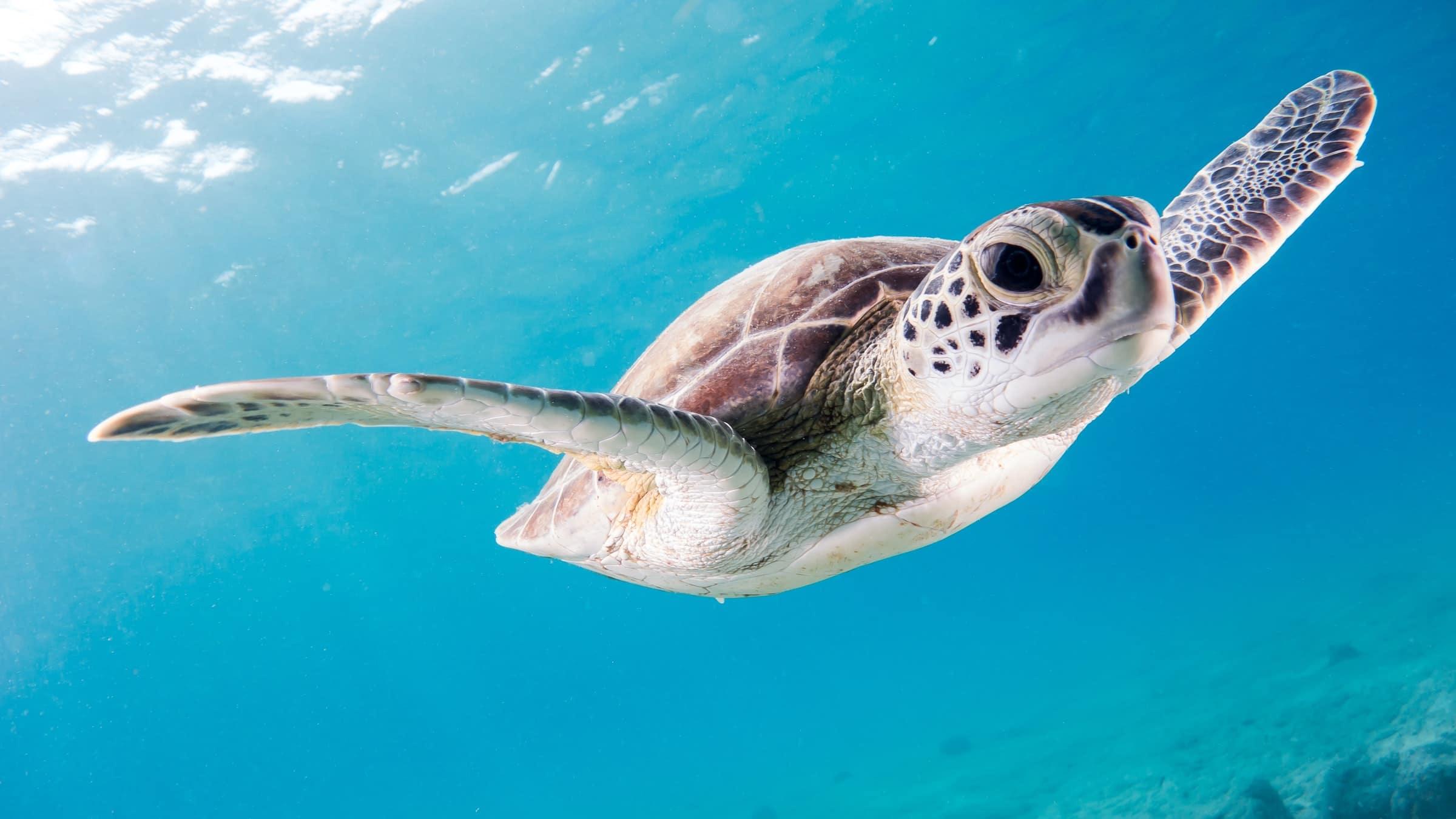 To do Bonaire: Schildpadden spotten