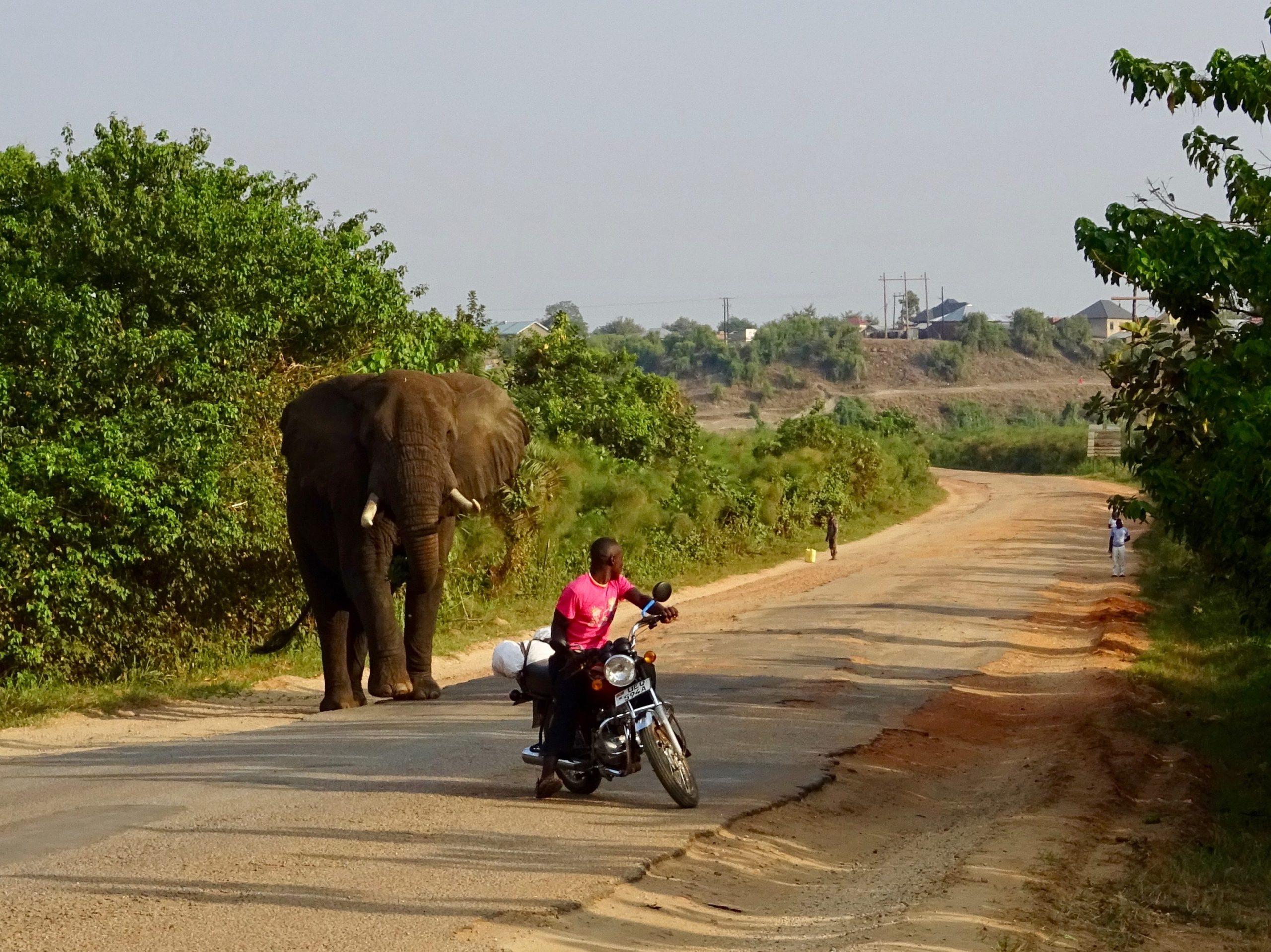Een mislukte poging om een olifant te passeren