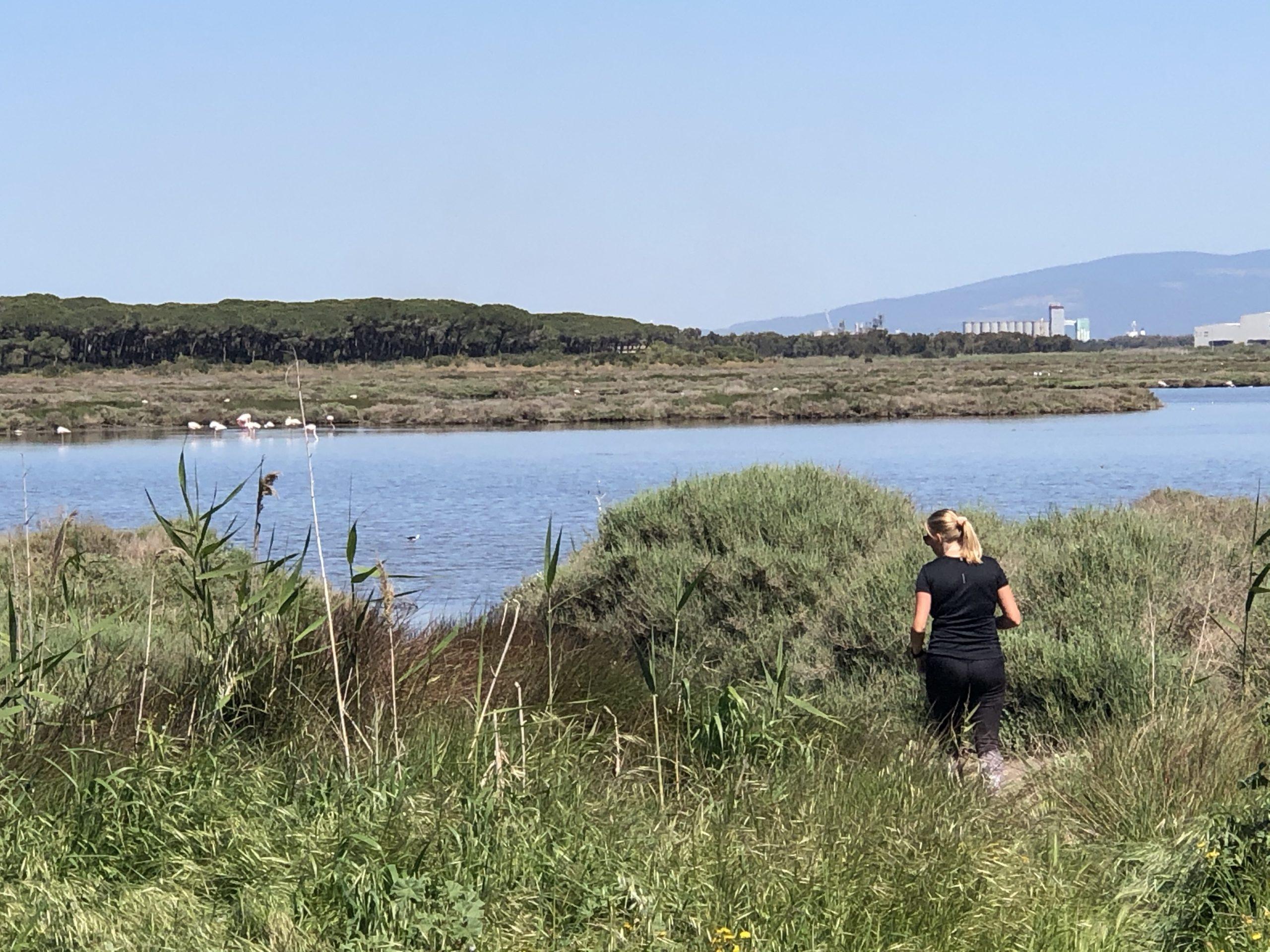 Flamingo's in Sardinië